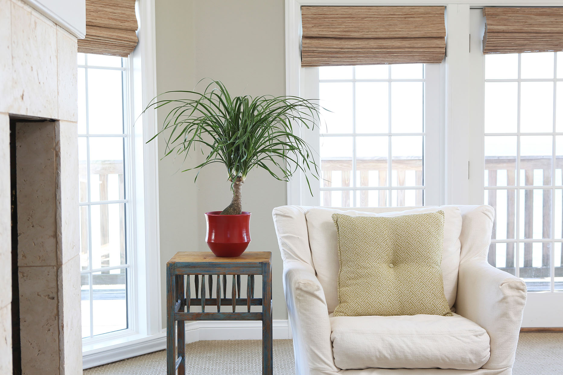 Ponytail palm houseplant in a red ceramic pot on a side table next to an ivory armchair