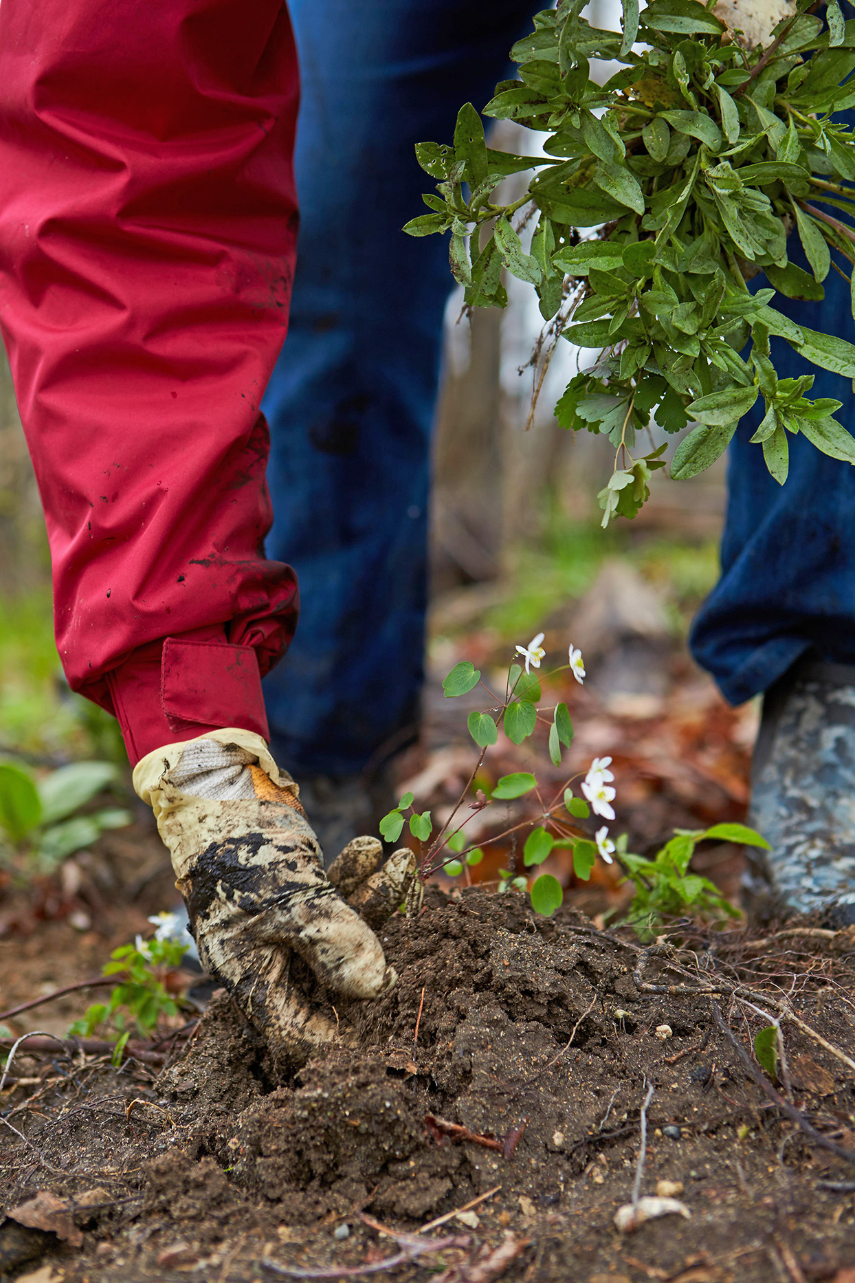 person planting in organic garden soil