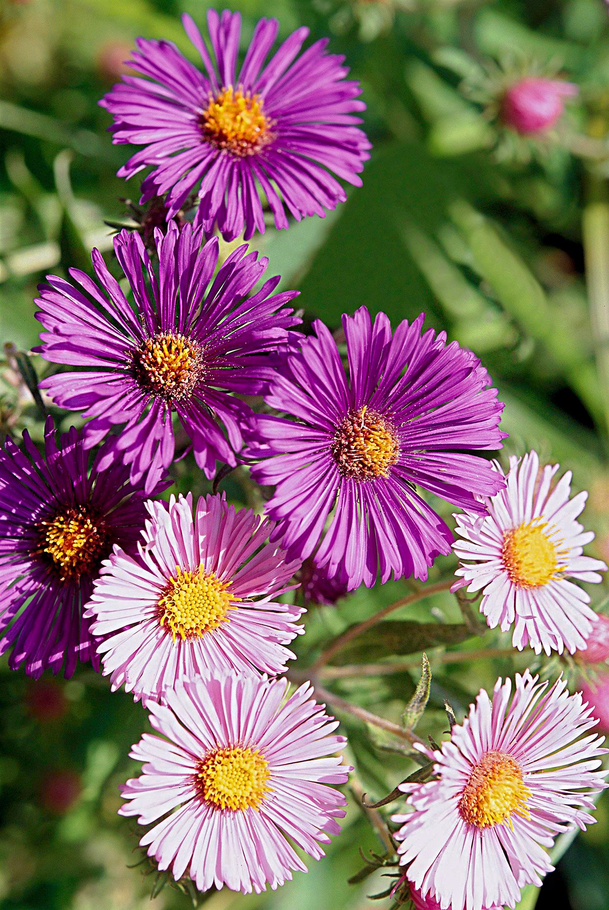 Top Plants That Thrive In Clay Better