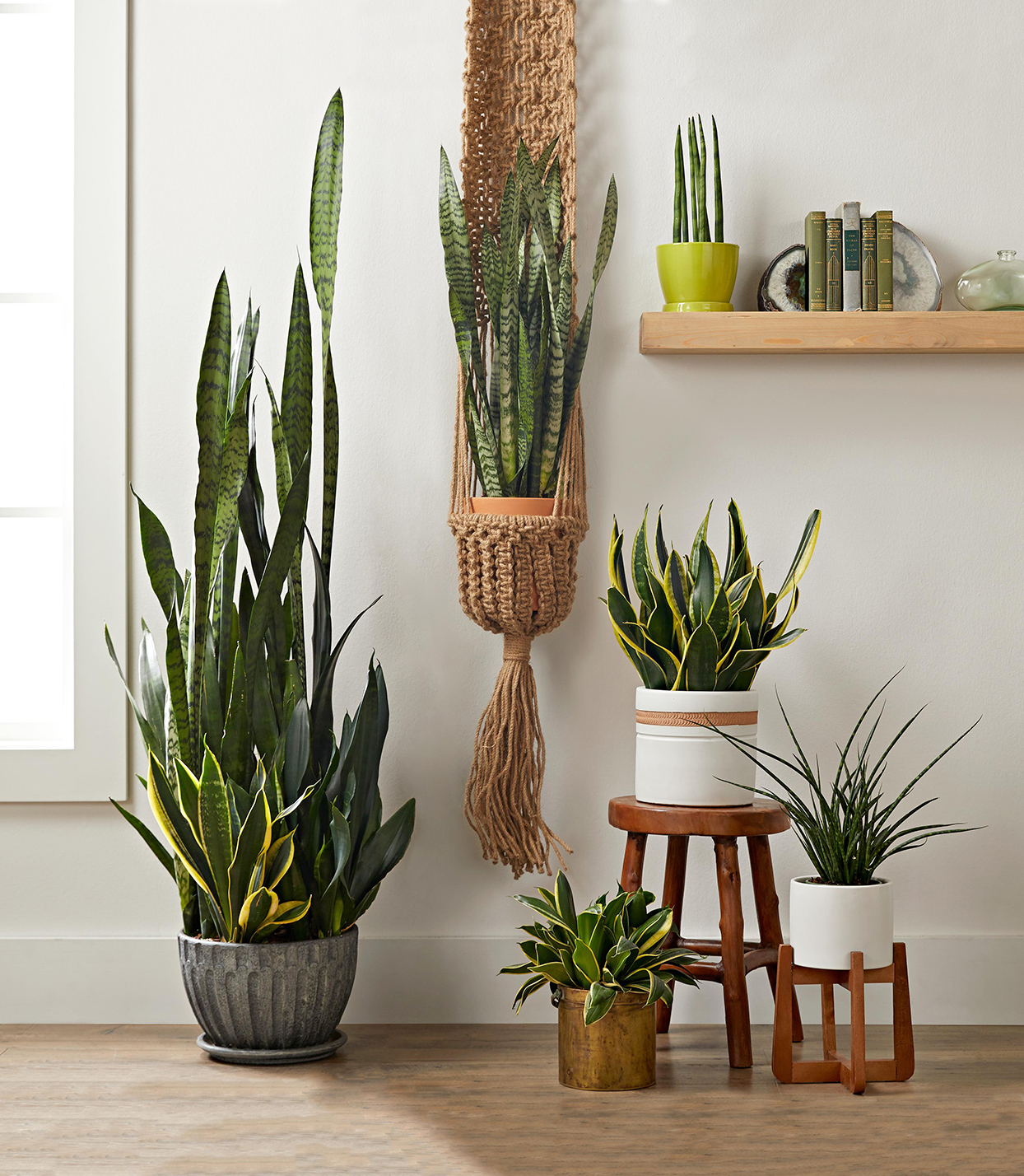 house plants, planters, and stands