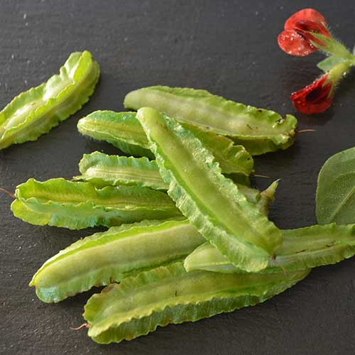 Lime green asparagus pea pods with ruffled edges on each pod