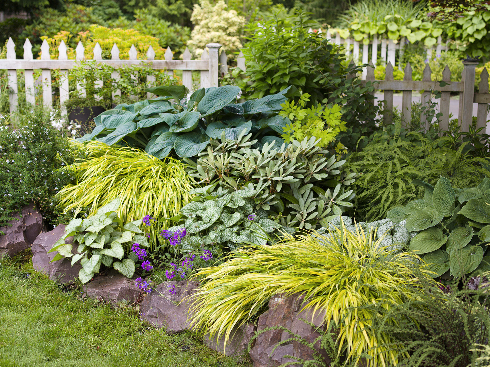 garden of assorted plant with rock edge