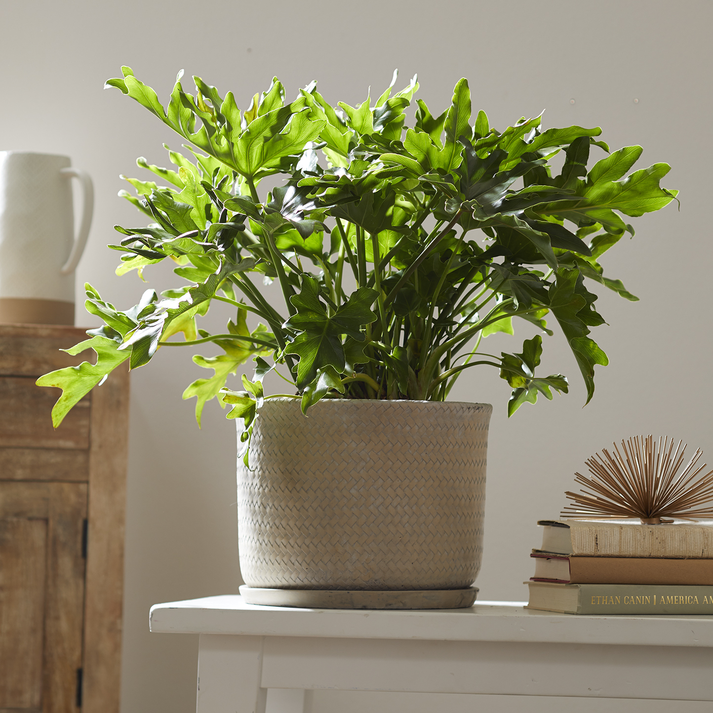 philodendron plant in white pot on white shelf