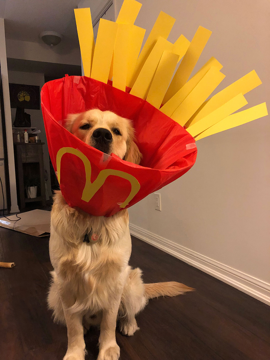 dog dressed as french fries