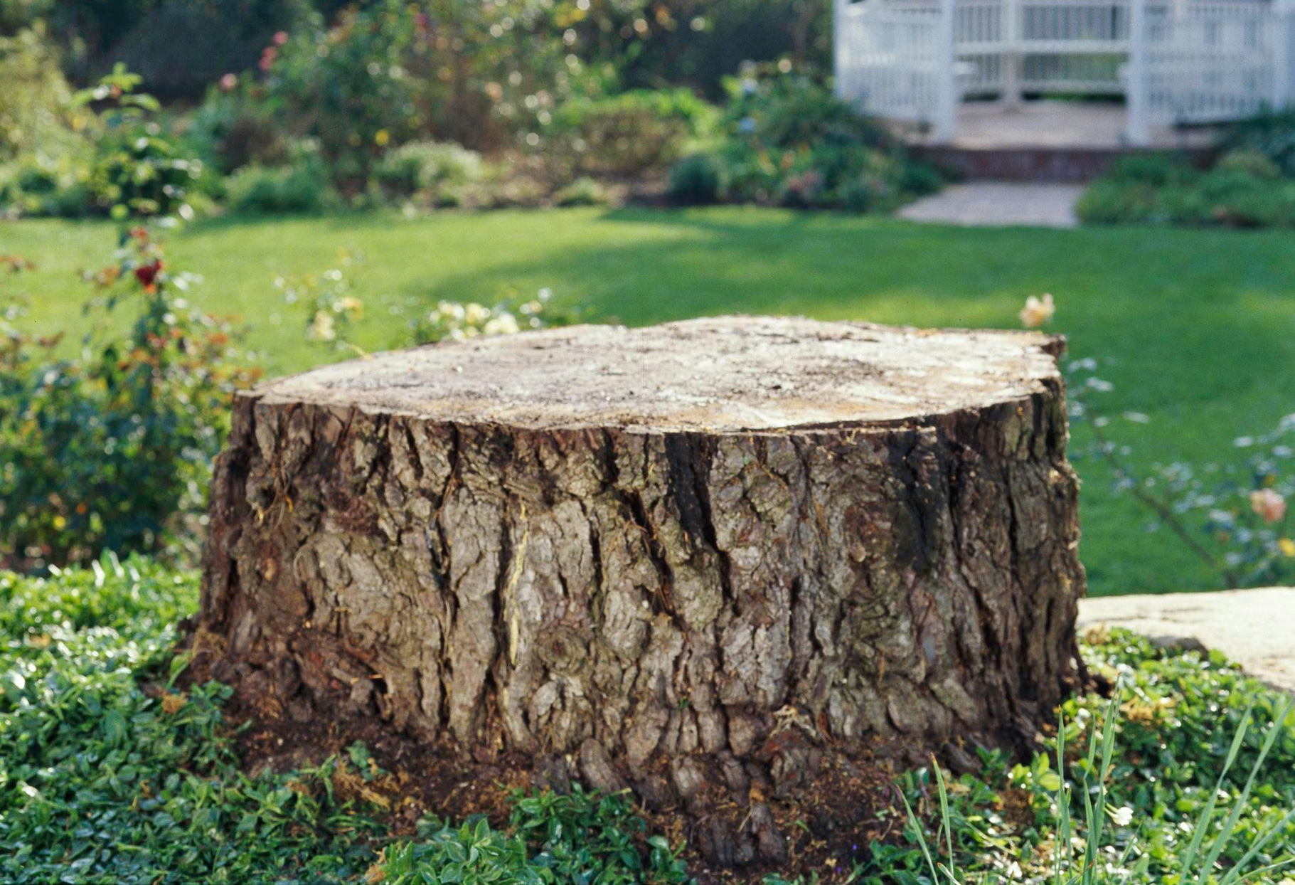 tree stump with house in background