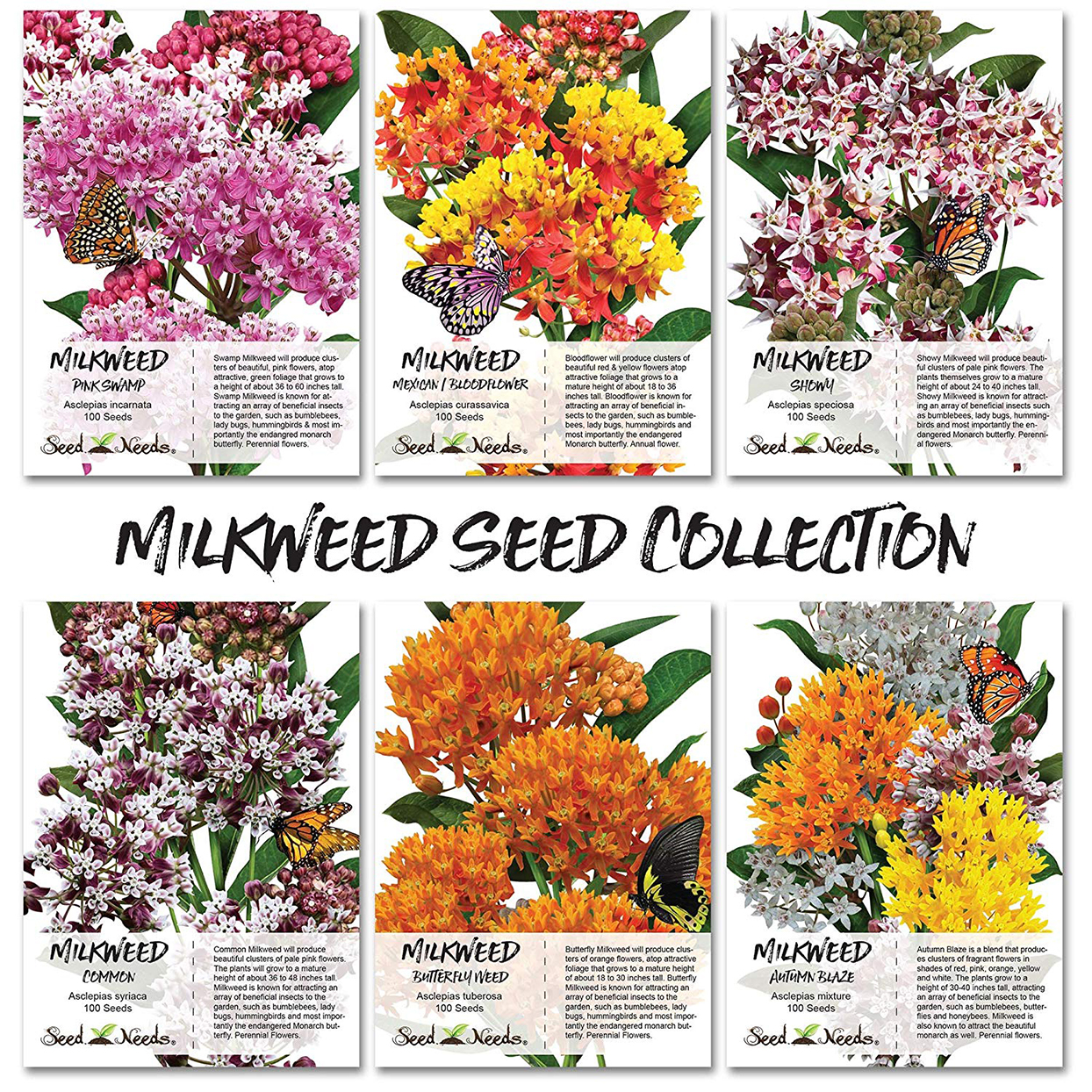 seed images drawings hundreds seeds accessible gardens