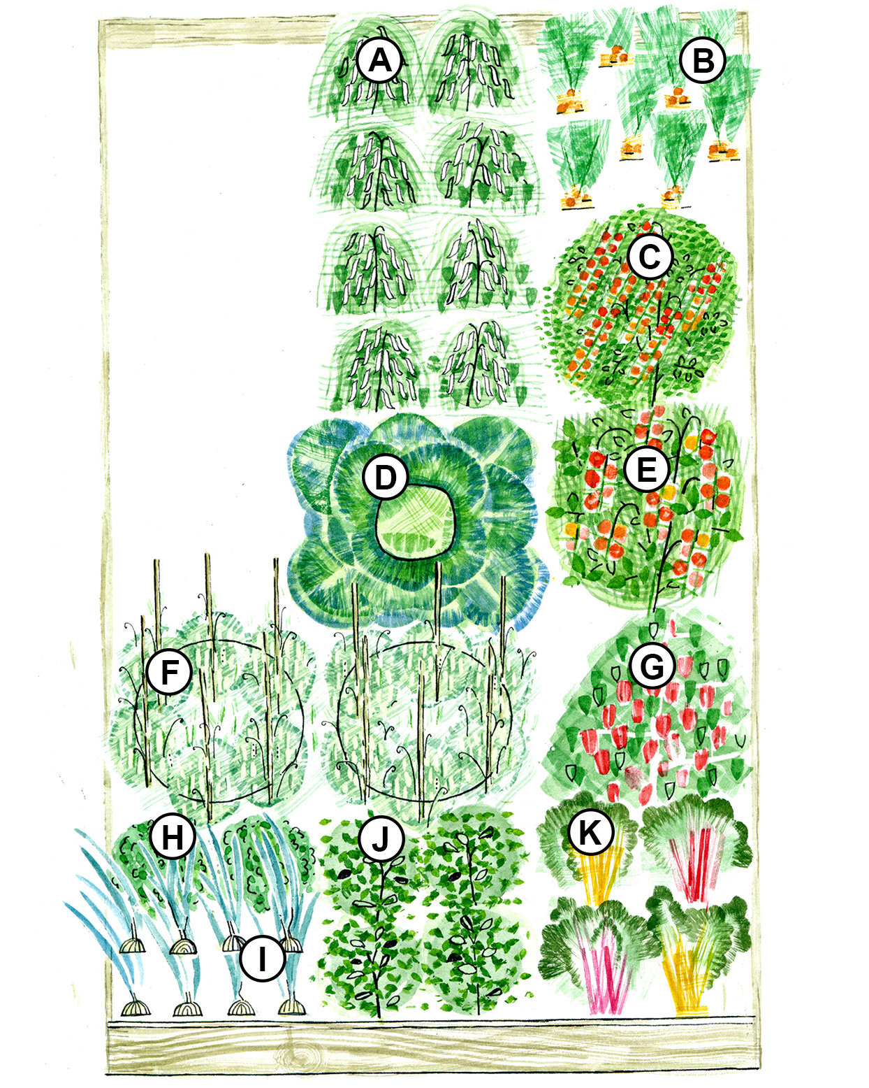 summer raised-bed garden plan