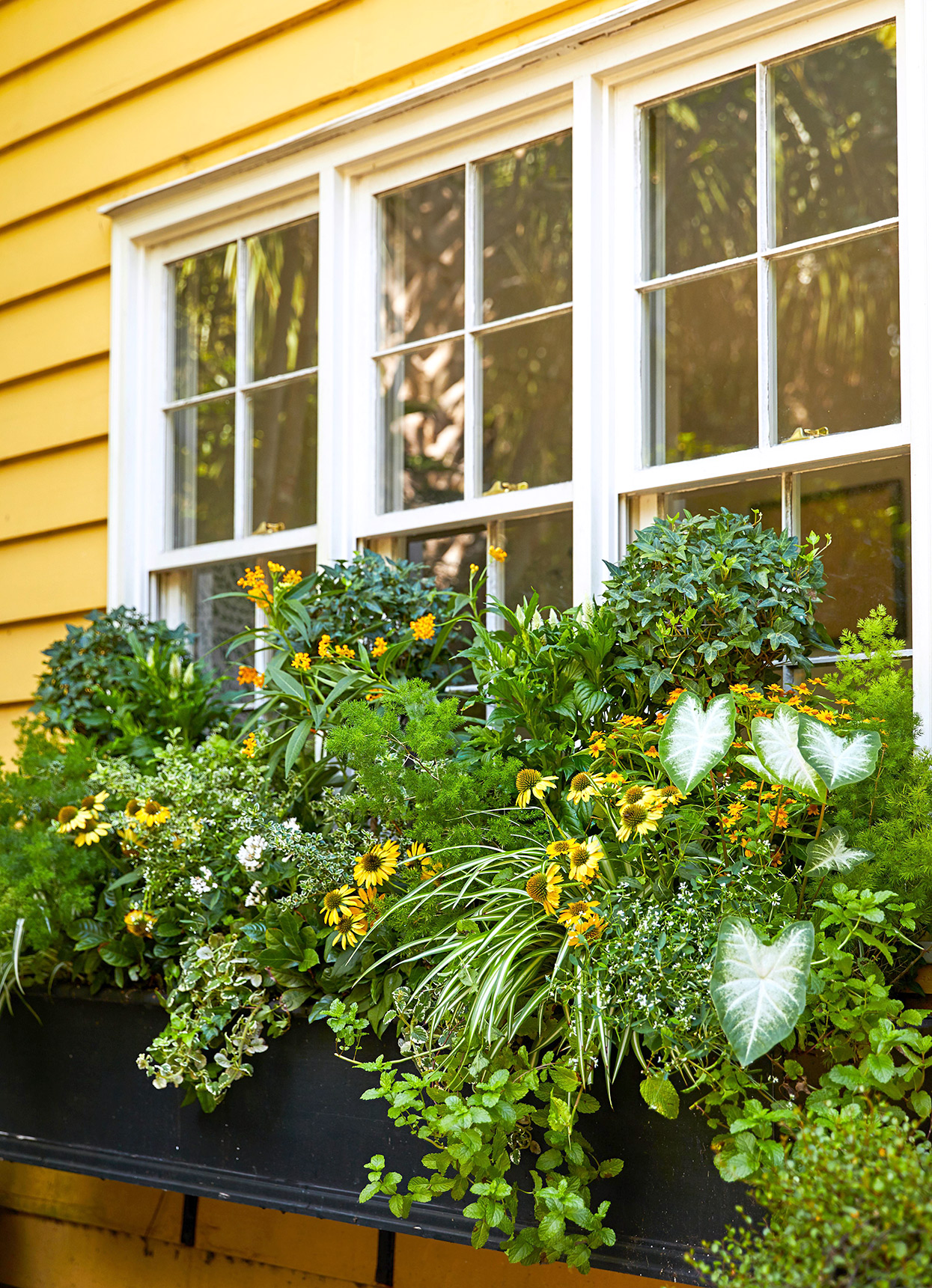 yellow exterior with herbs and flowers in window box