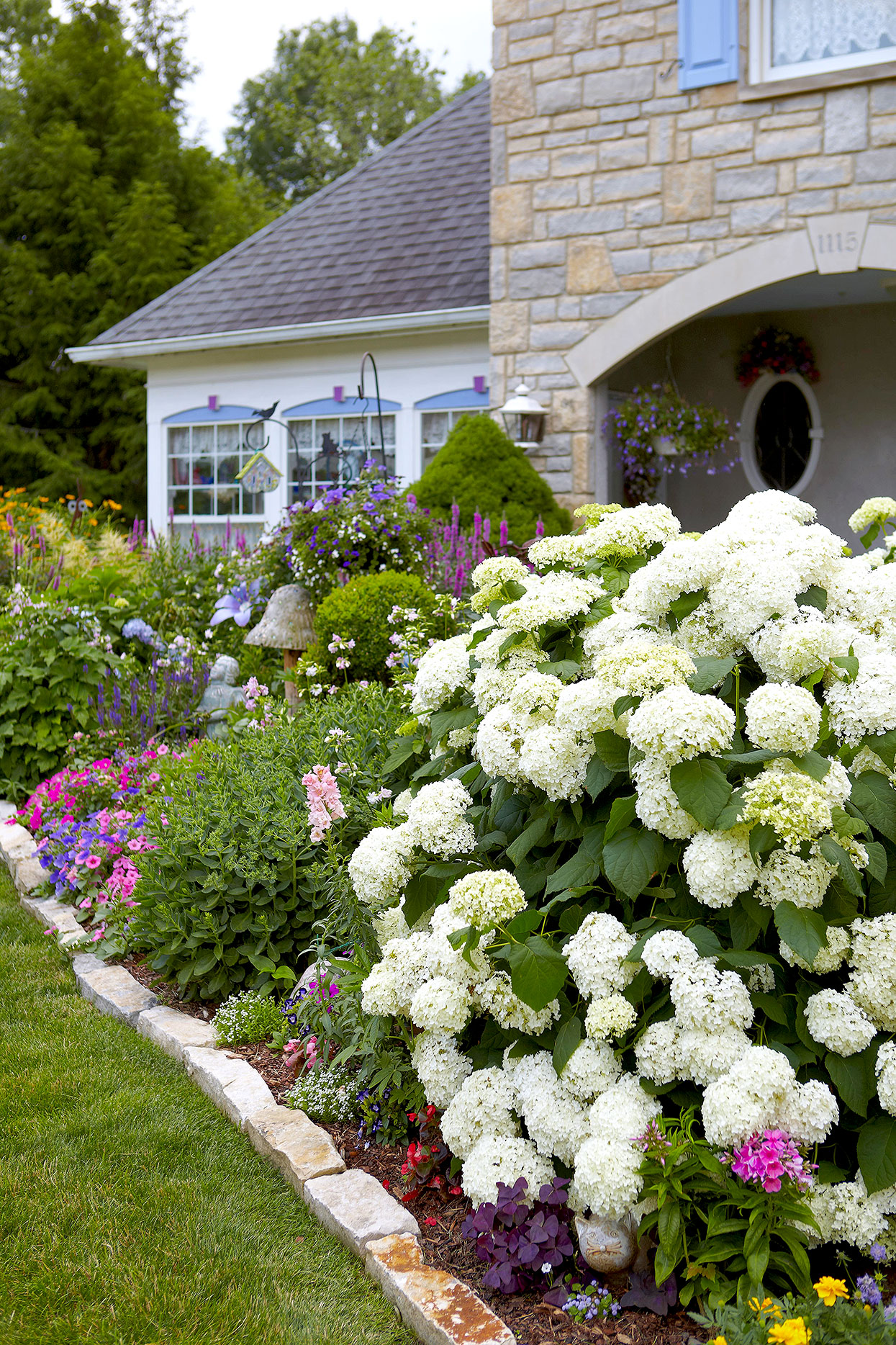 white annabelle hydrangea in flower bed