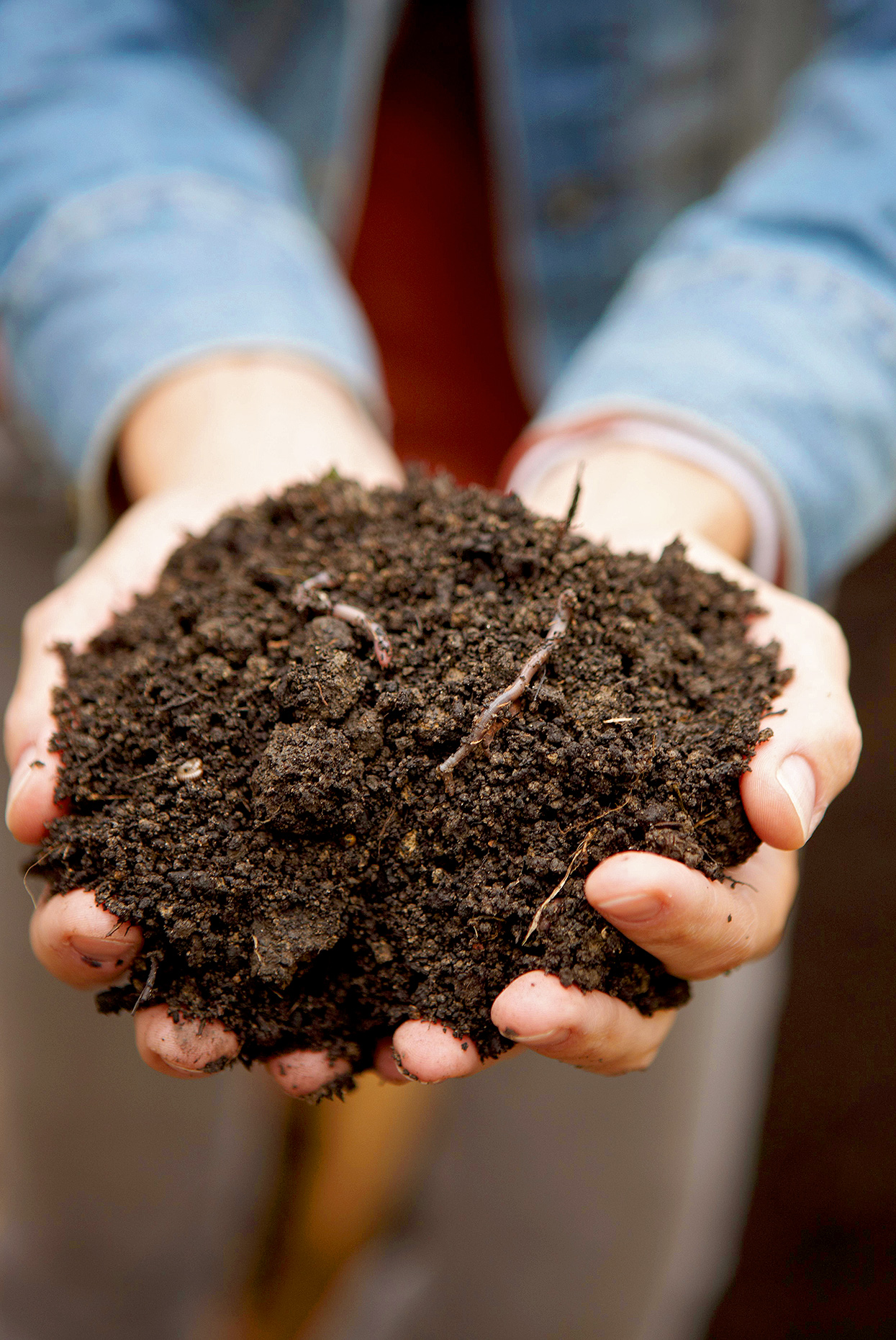 hands holding organic material for soil