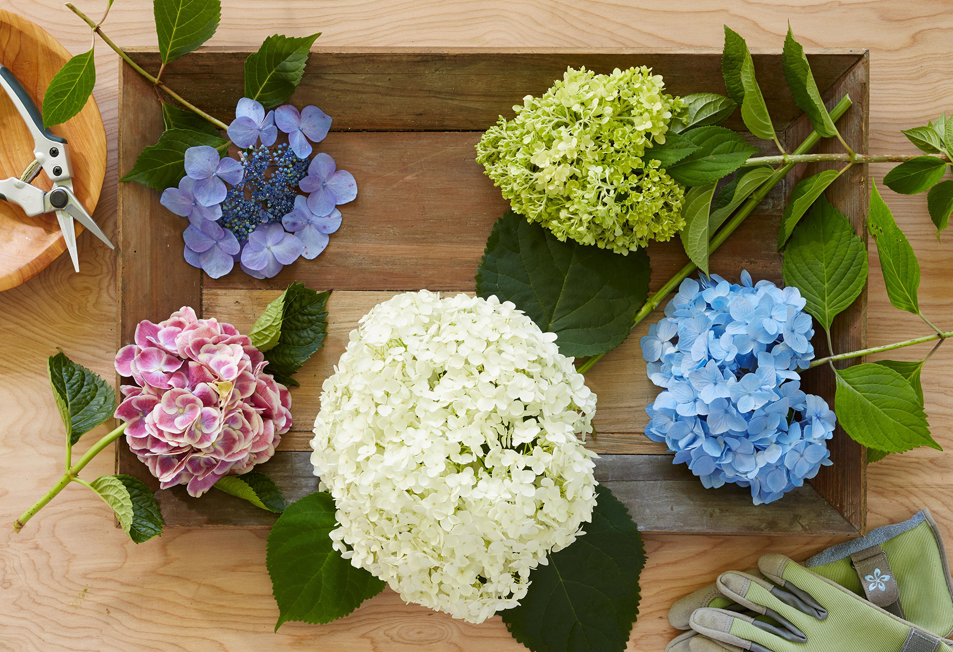 wood crate of colorful hydrangeas