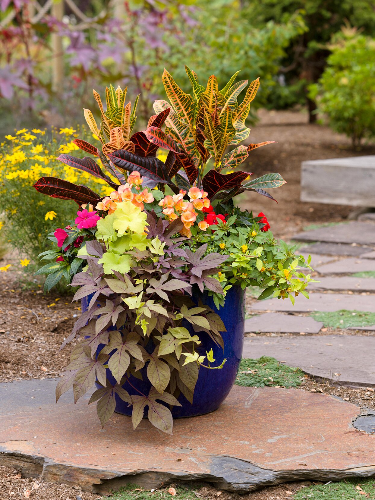 blue ceramic container with bright tropical plants
