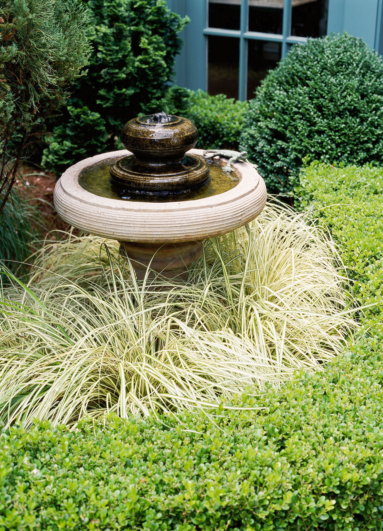 garden plants and shrubs surrounding bird bath