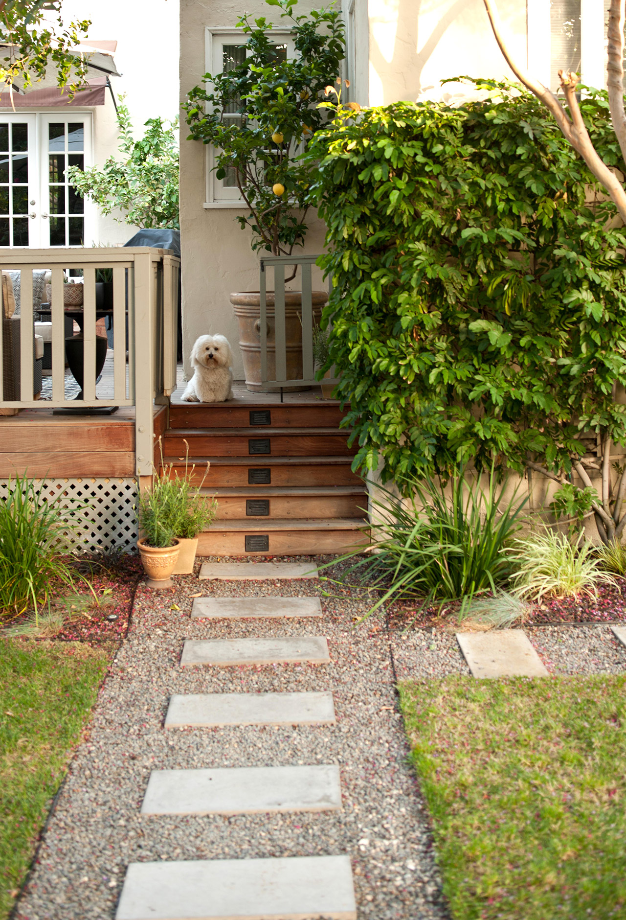 dog on deck gravel path with stepping stones