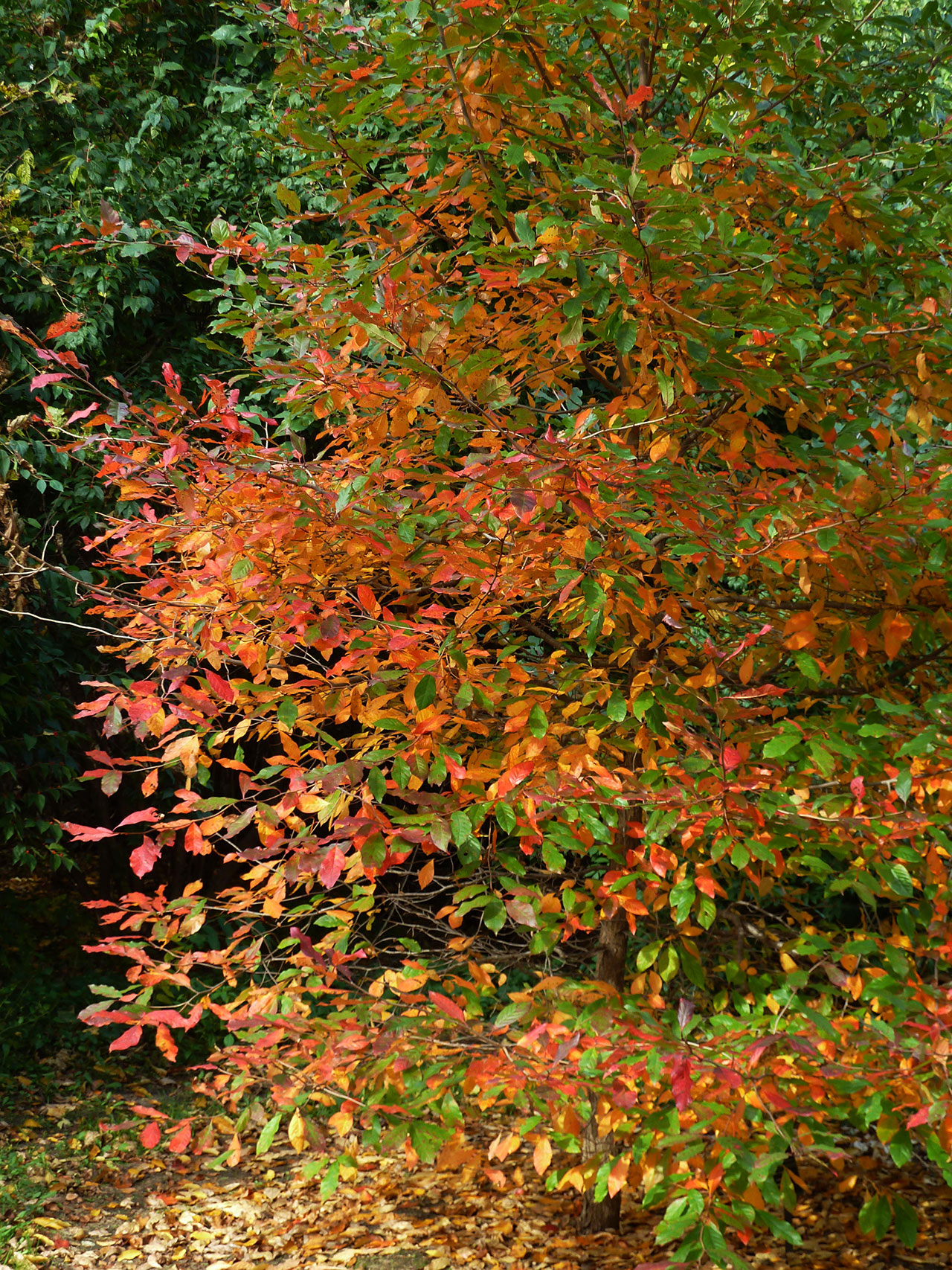 tepedlo tree fall foliage