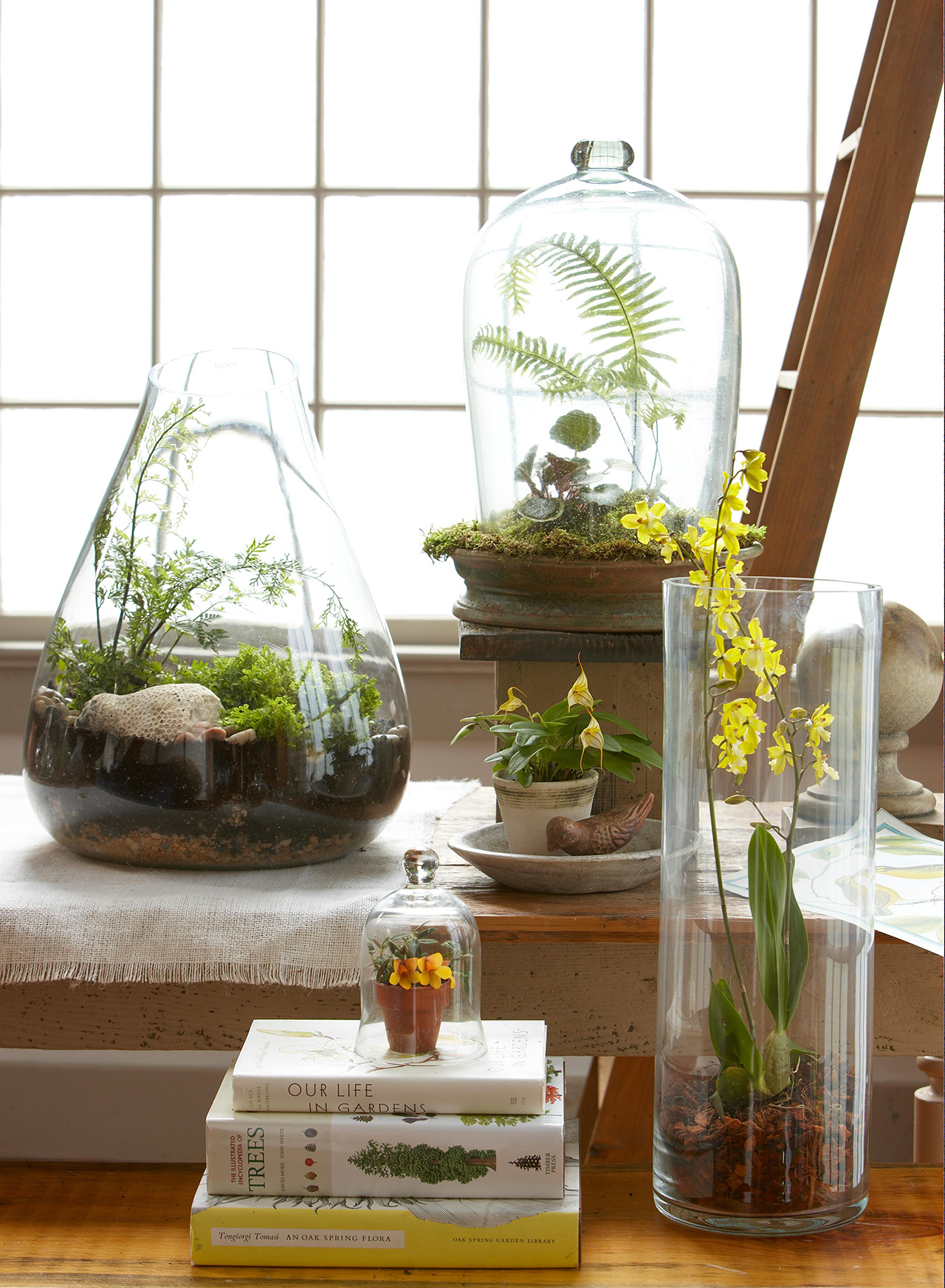 Top Plants For Terrariums Better Homes Gardens