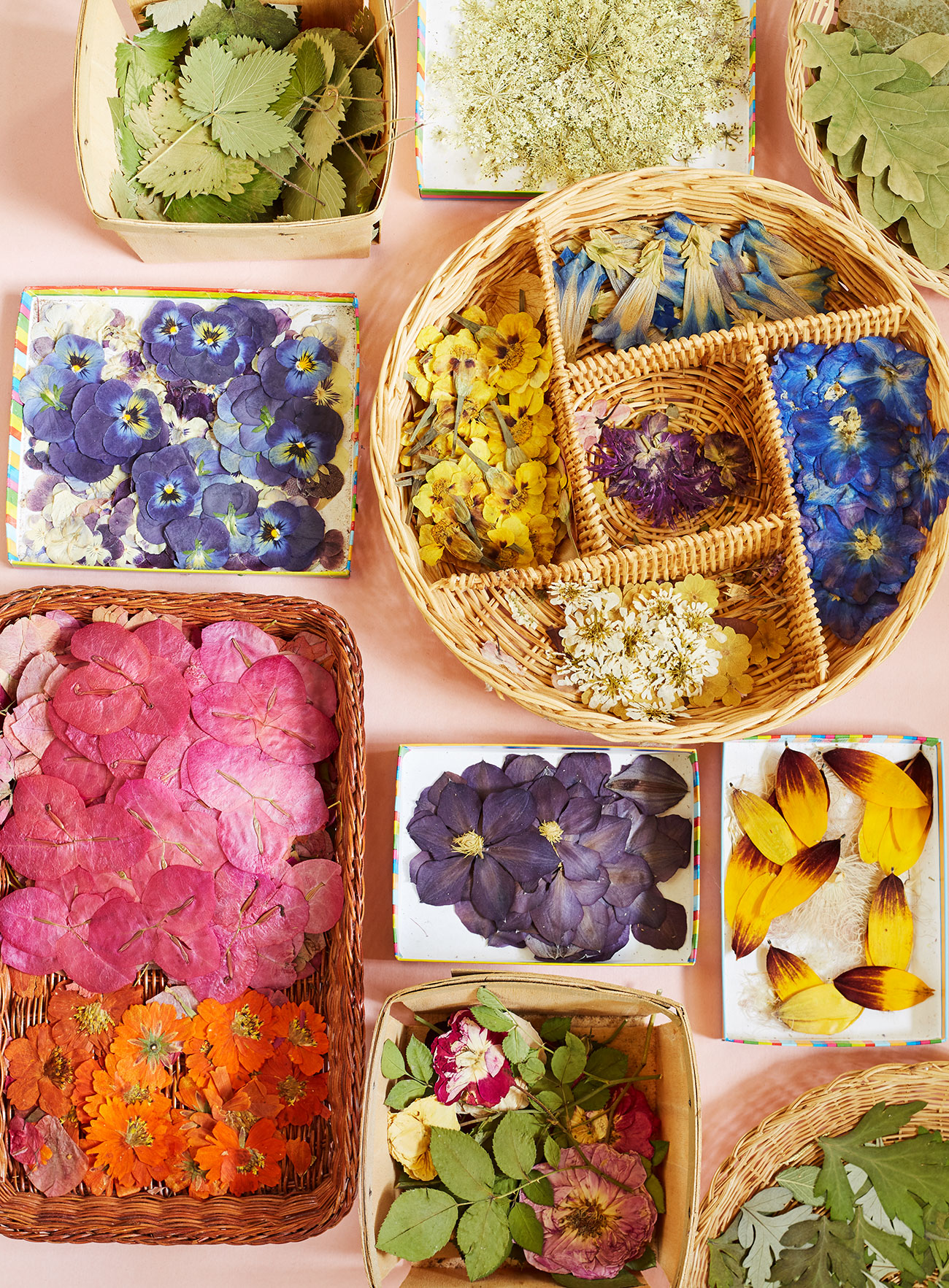 assorted pressed flowers organized baskets