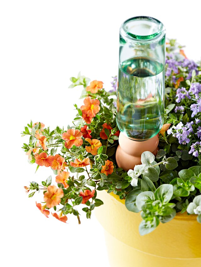 potted flowers with bottle irrigation system