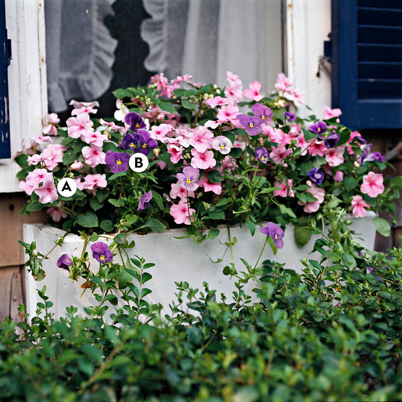 Window Box with Impatiens and Viola