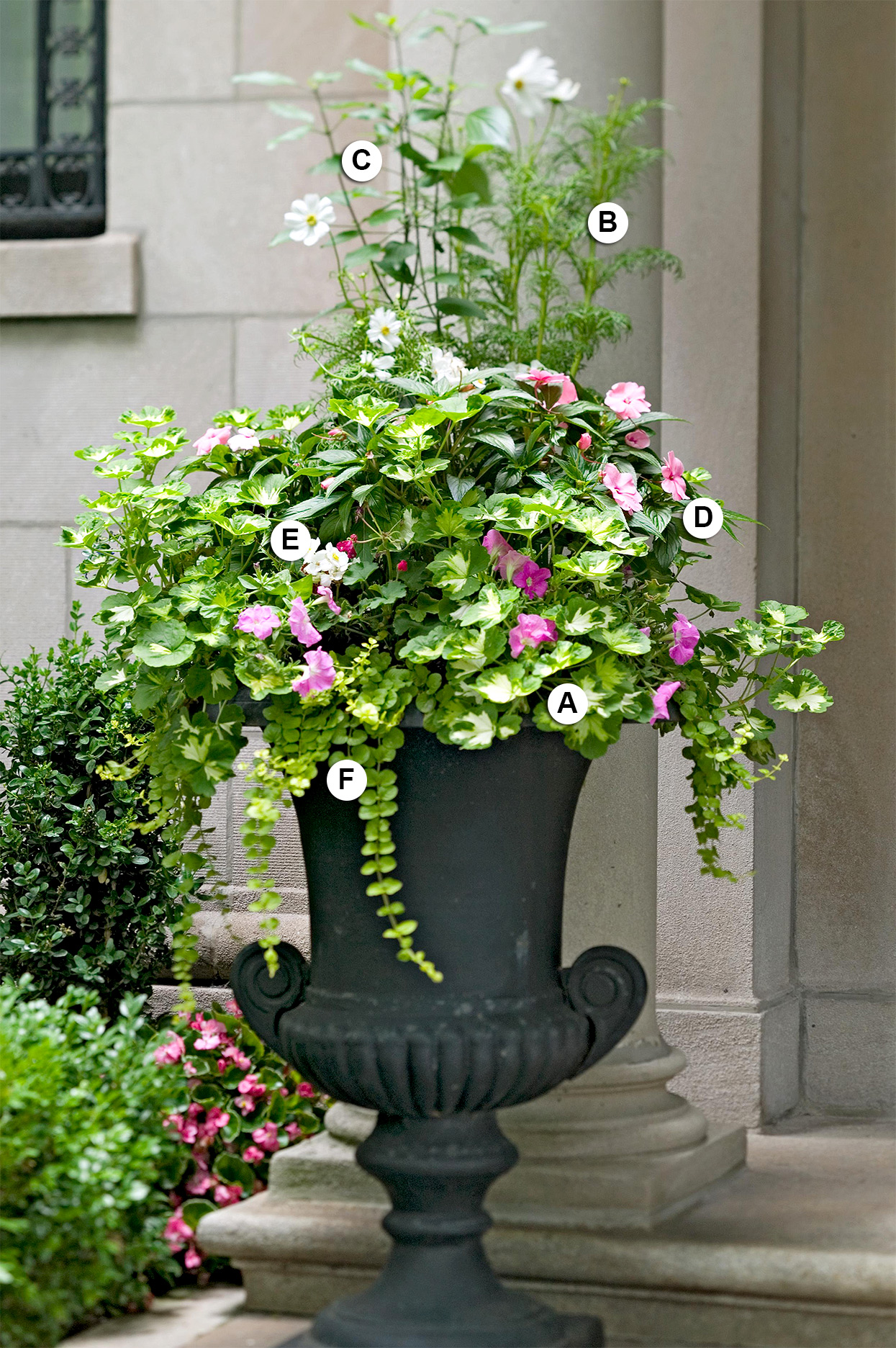 labeled formal tall geranium container