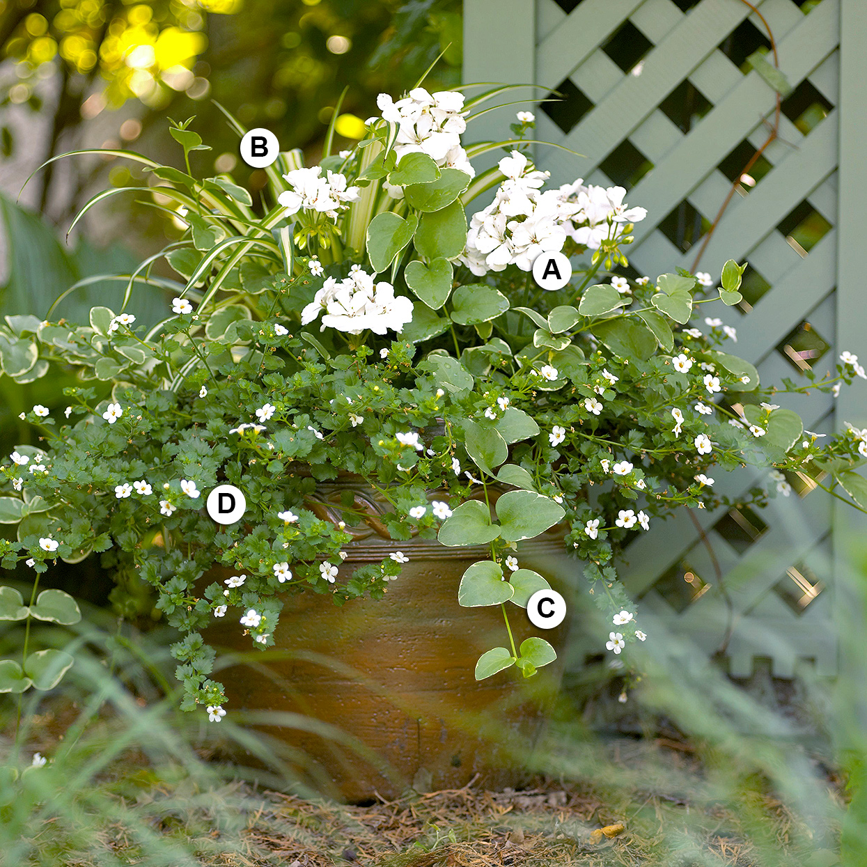 labeled all-white geranium container