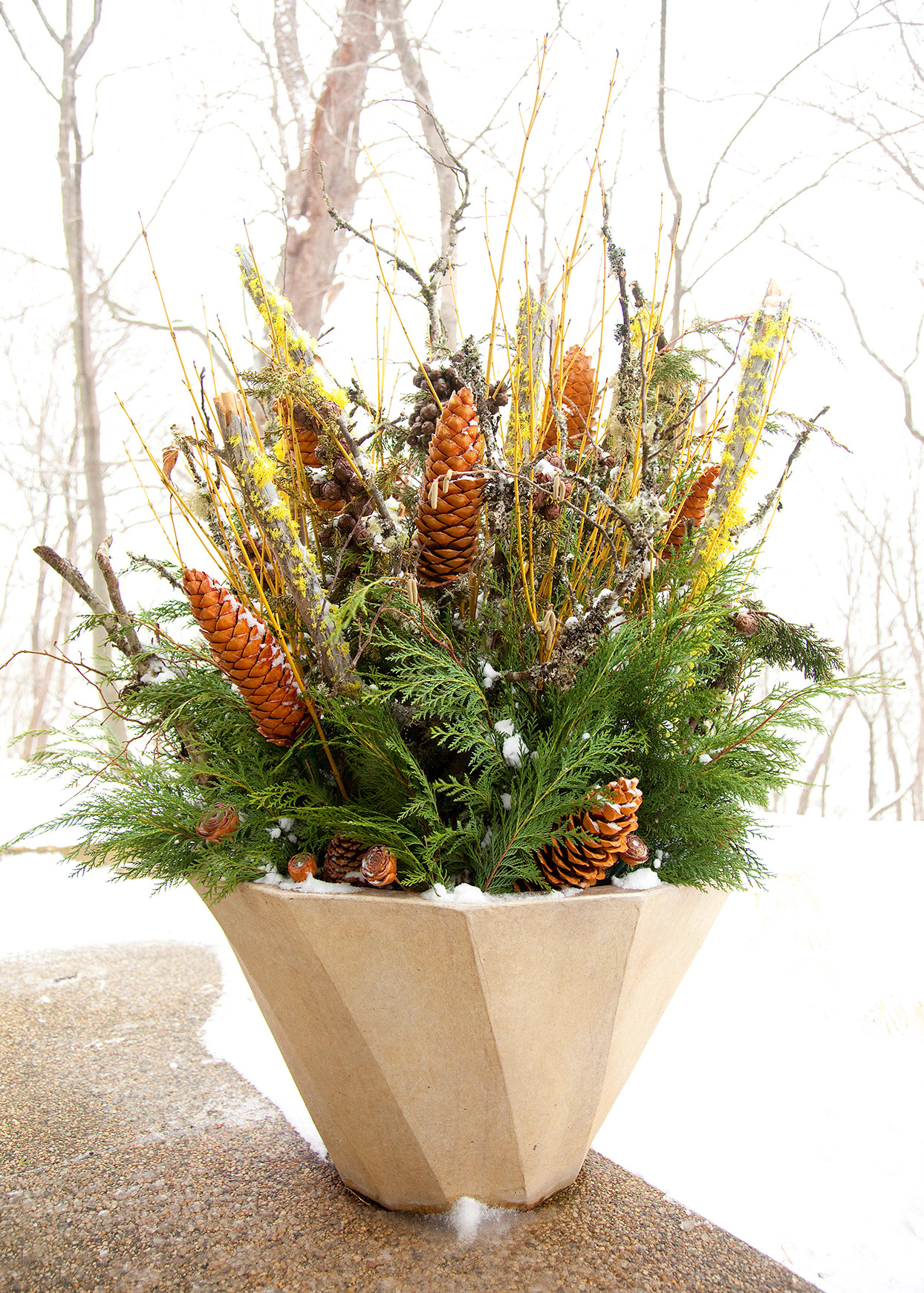 winter container with evergreens pinecones