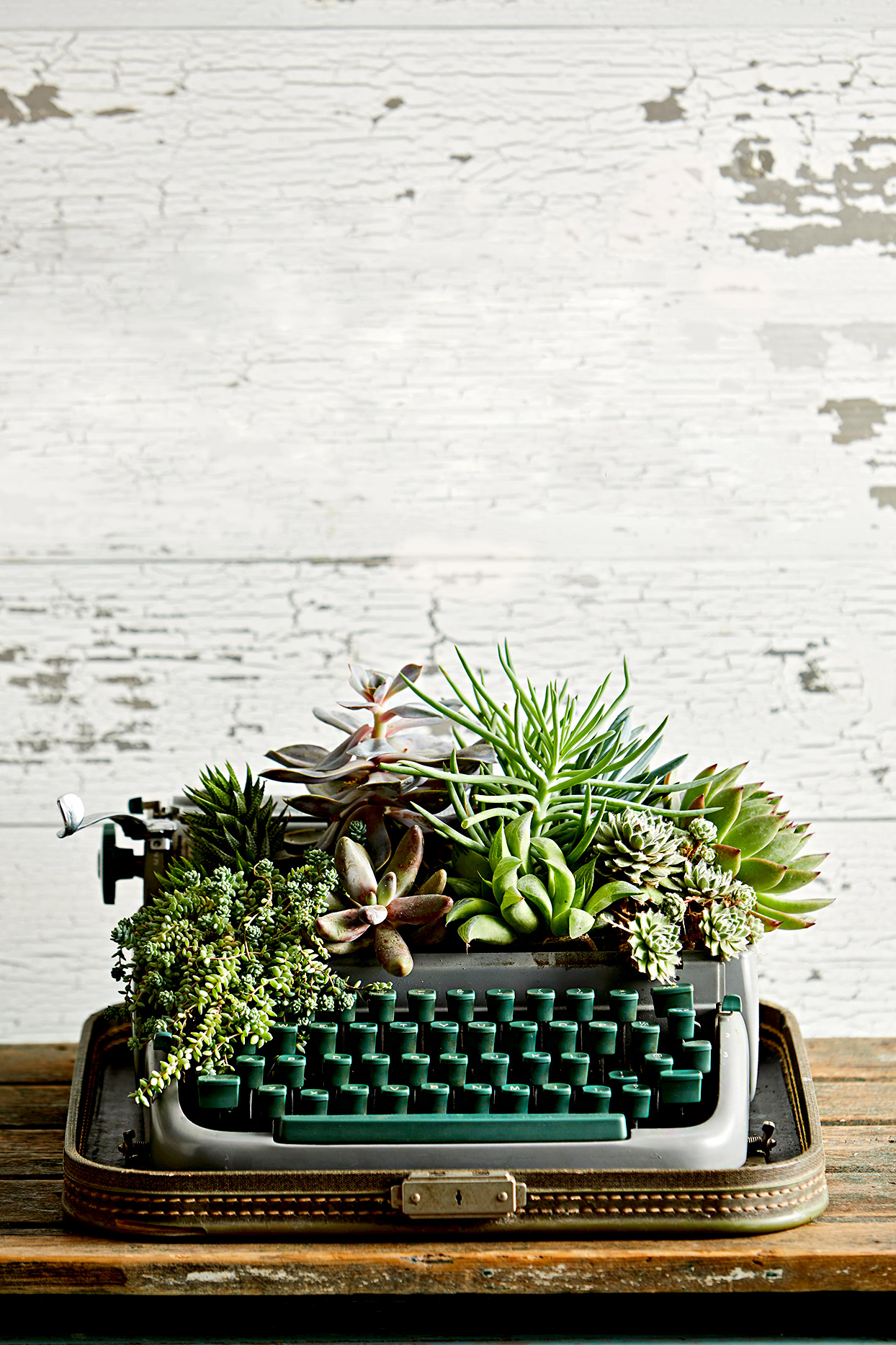 Vintage typewriter used as succulent planter