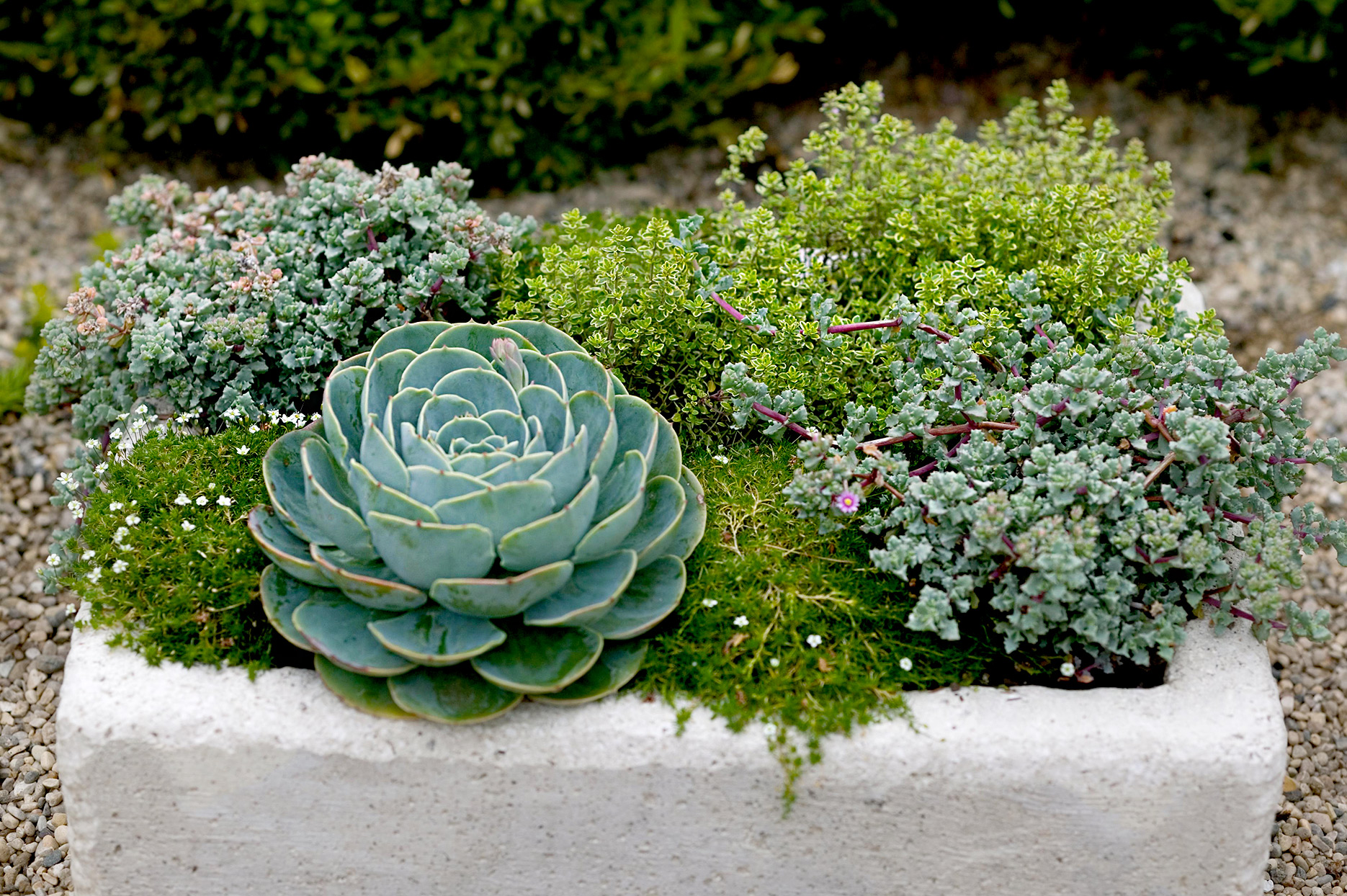Hypertufa trough with sedum