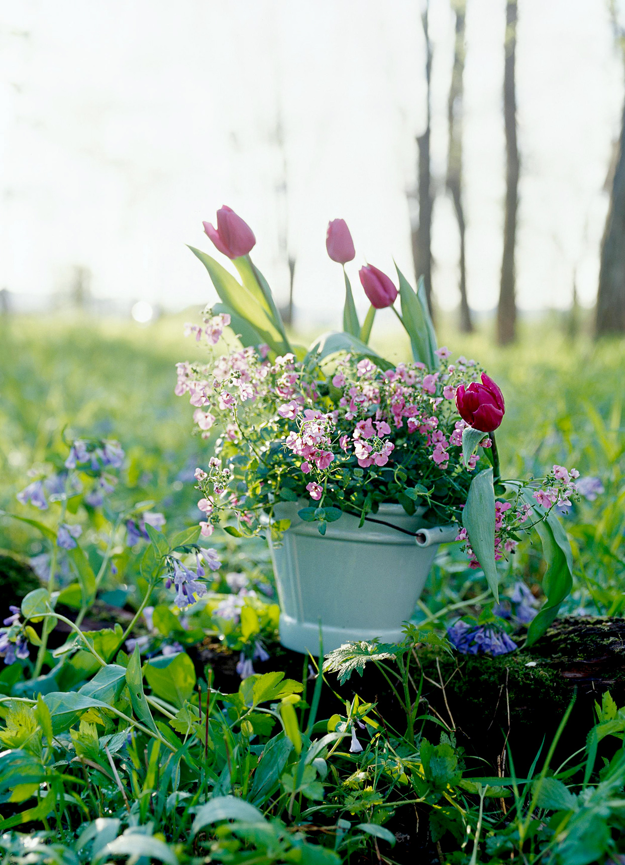 Tulips, daffodils, hyacinths in ceramic bucket