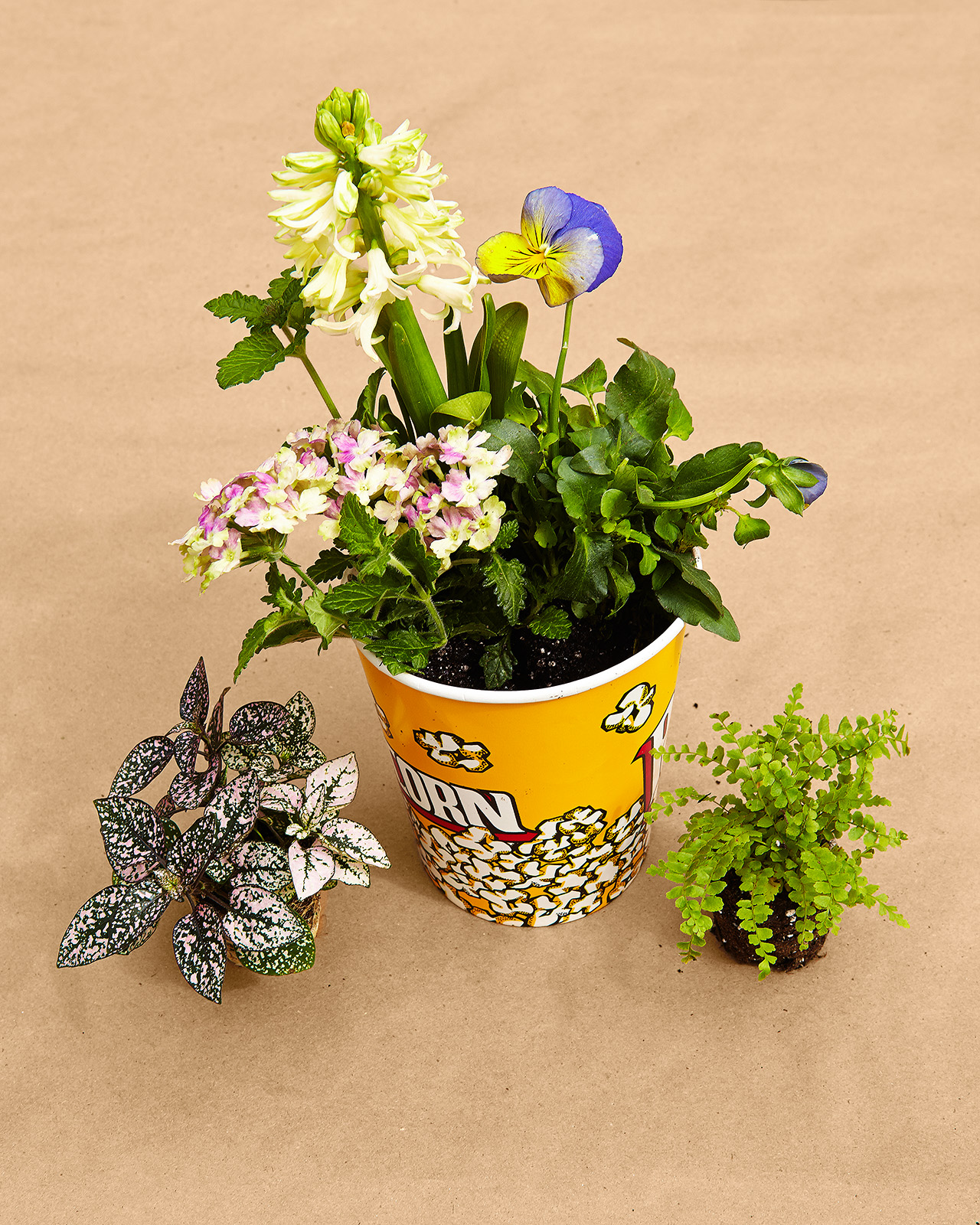 adding plants to soil in popcorn cup