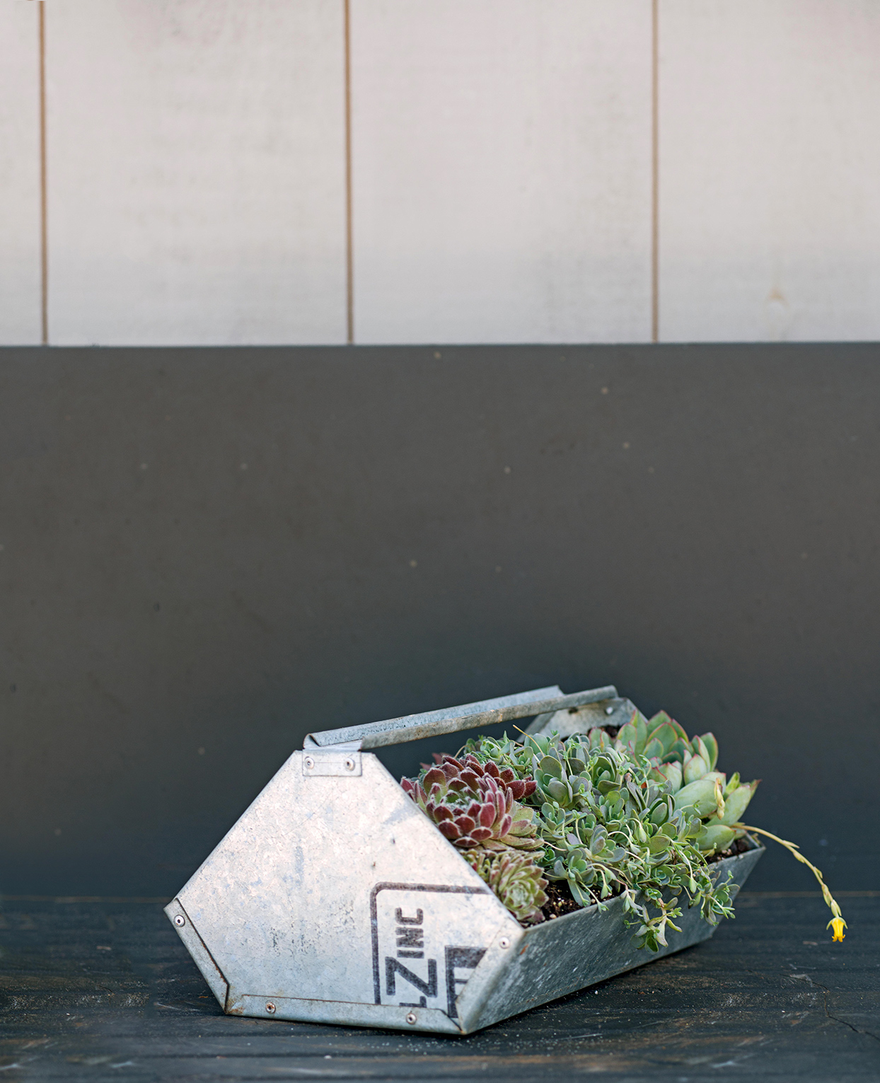 metal box with succulents on gray surface
