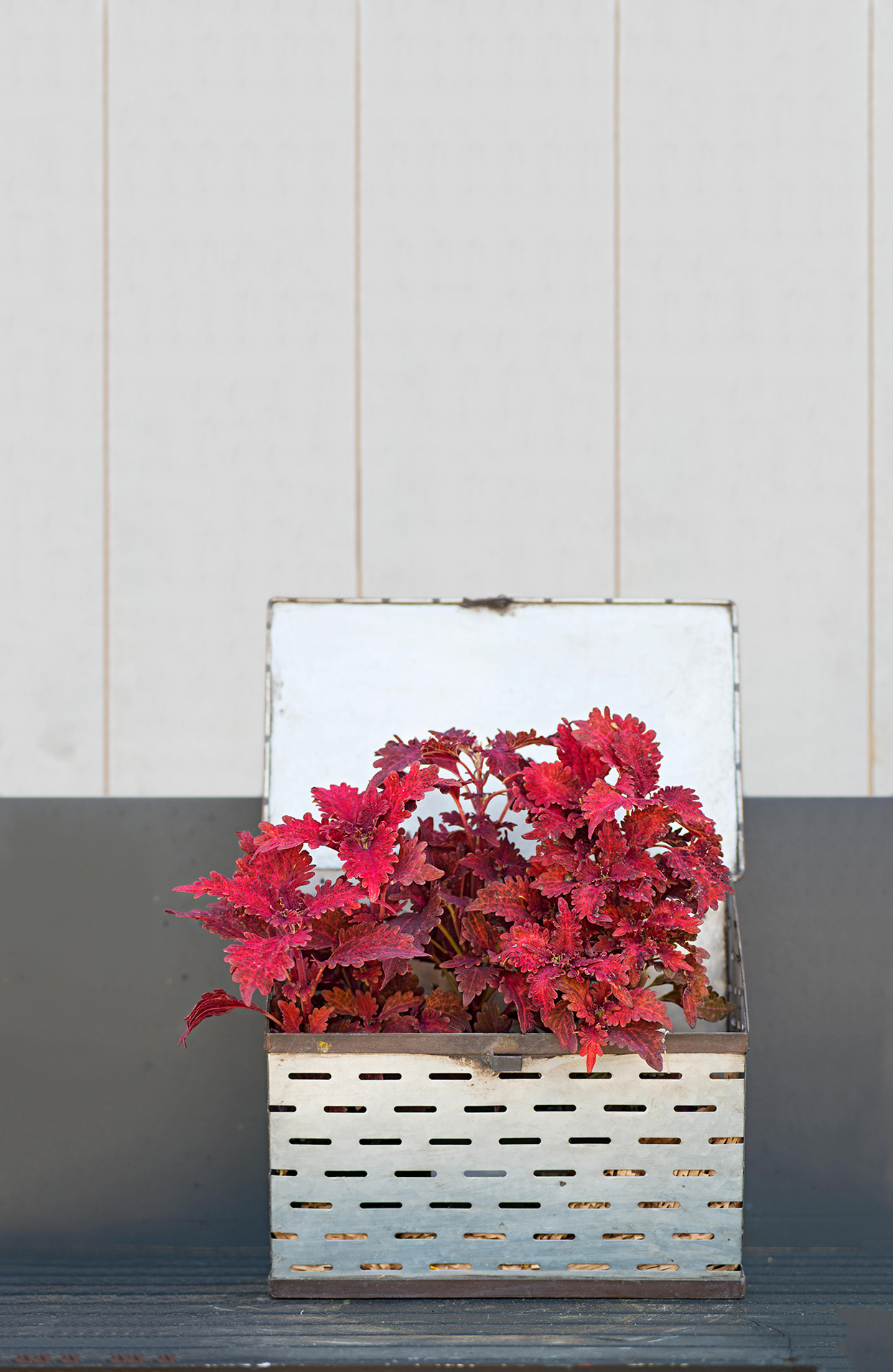 slatted metal box with red plants inside