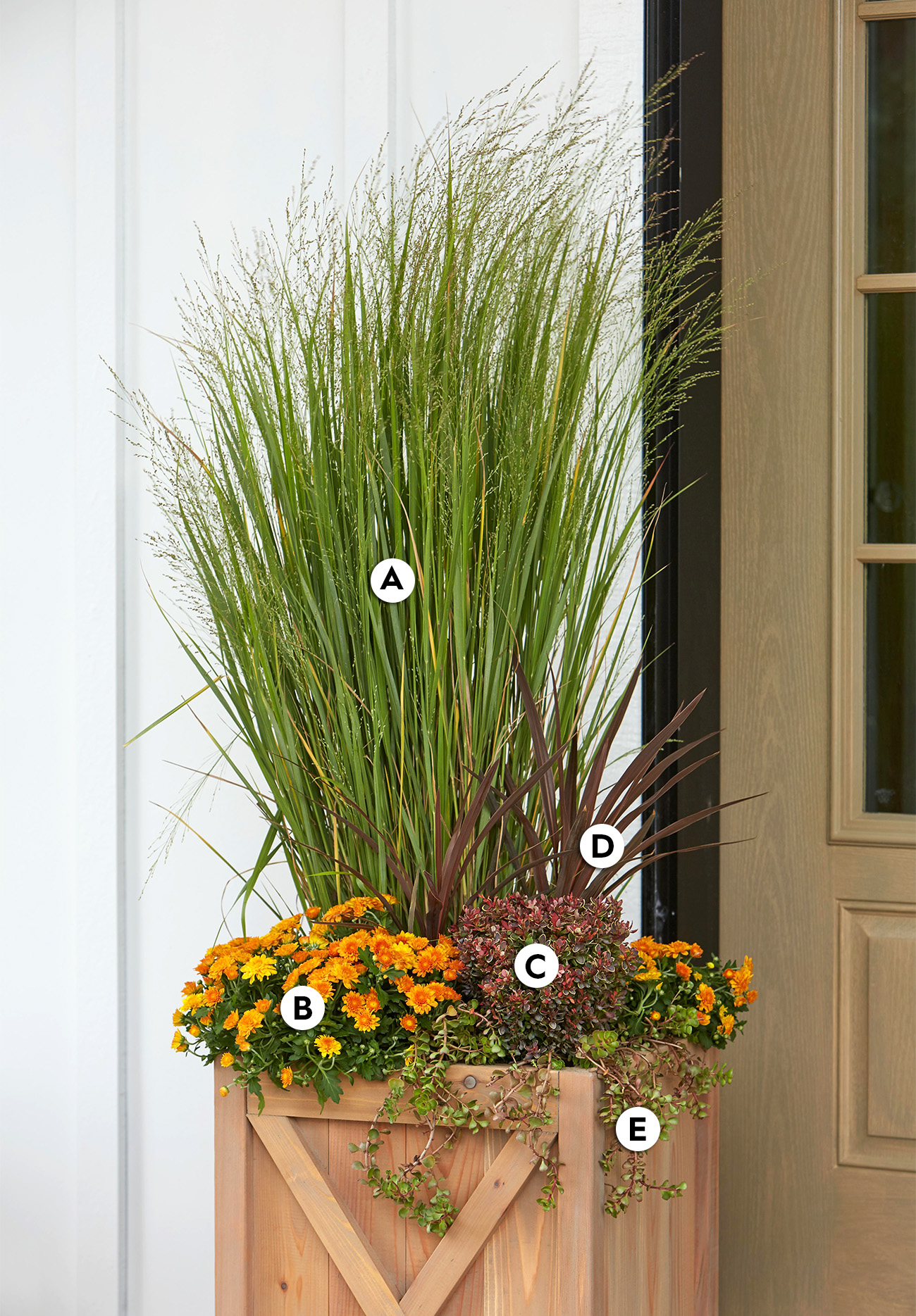 Towering Grass container garden