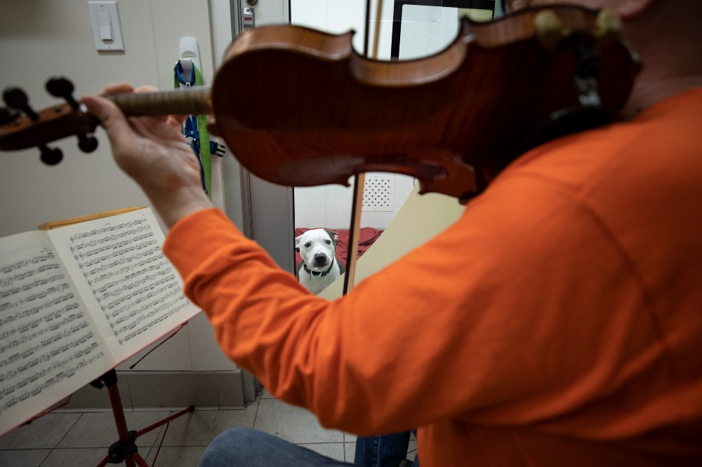 martin agee plays violin to shelter dog