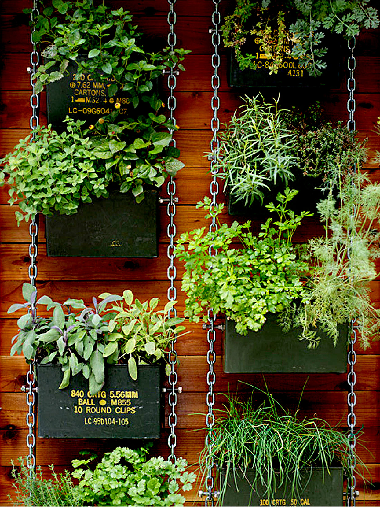 Plants in ammunition containers hanging on chains