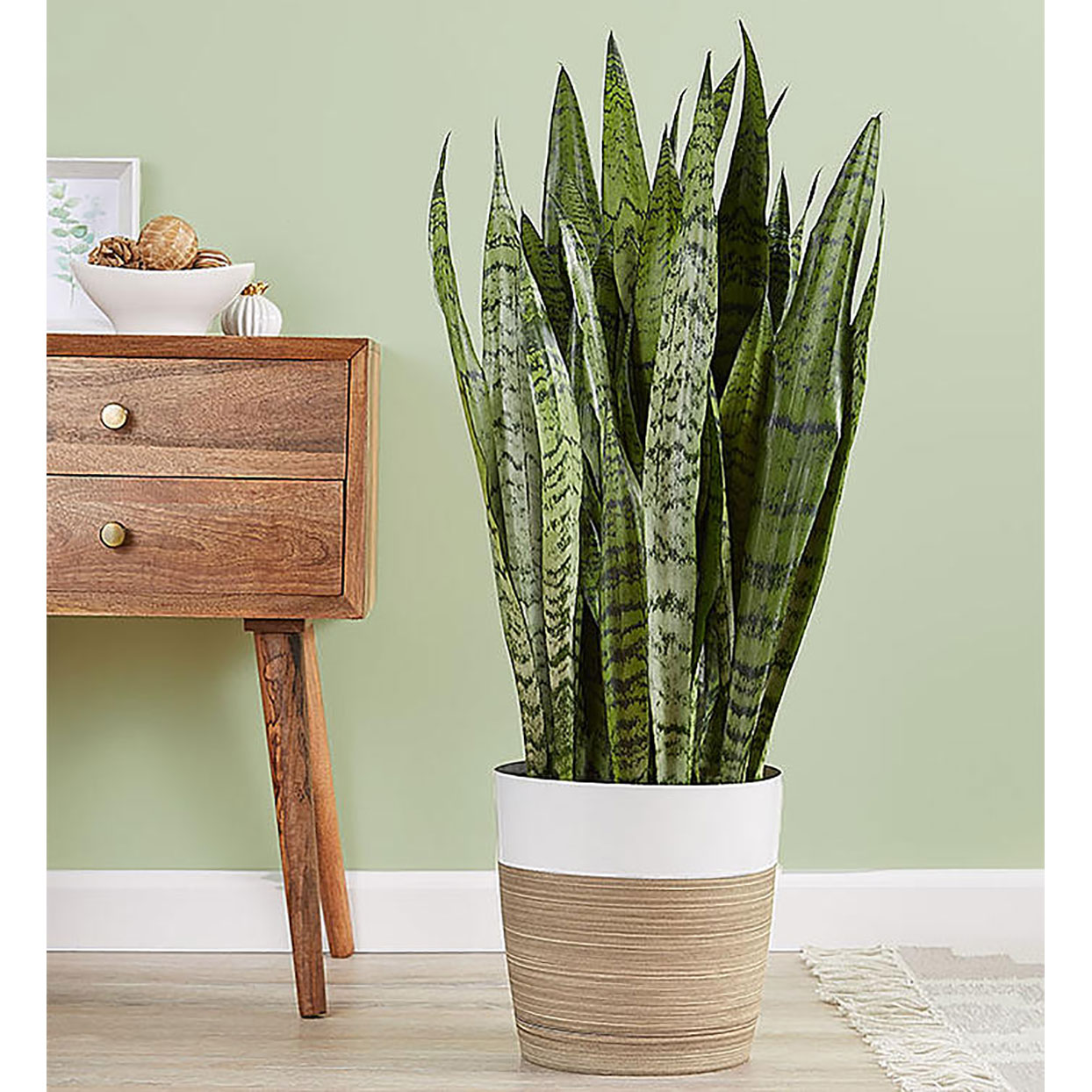 snake plant next to wooden end table