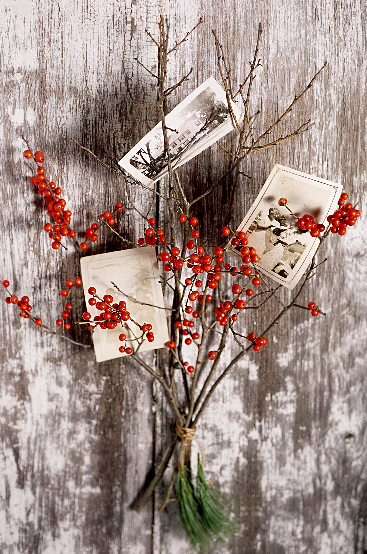 Branches with berries and photos