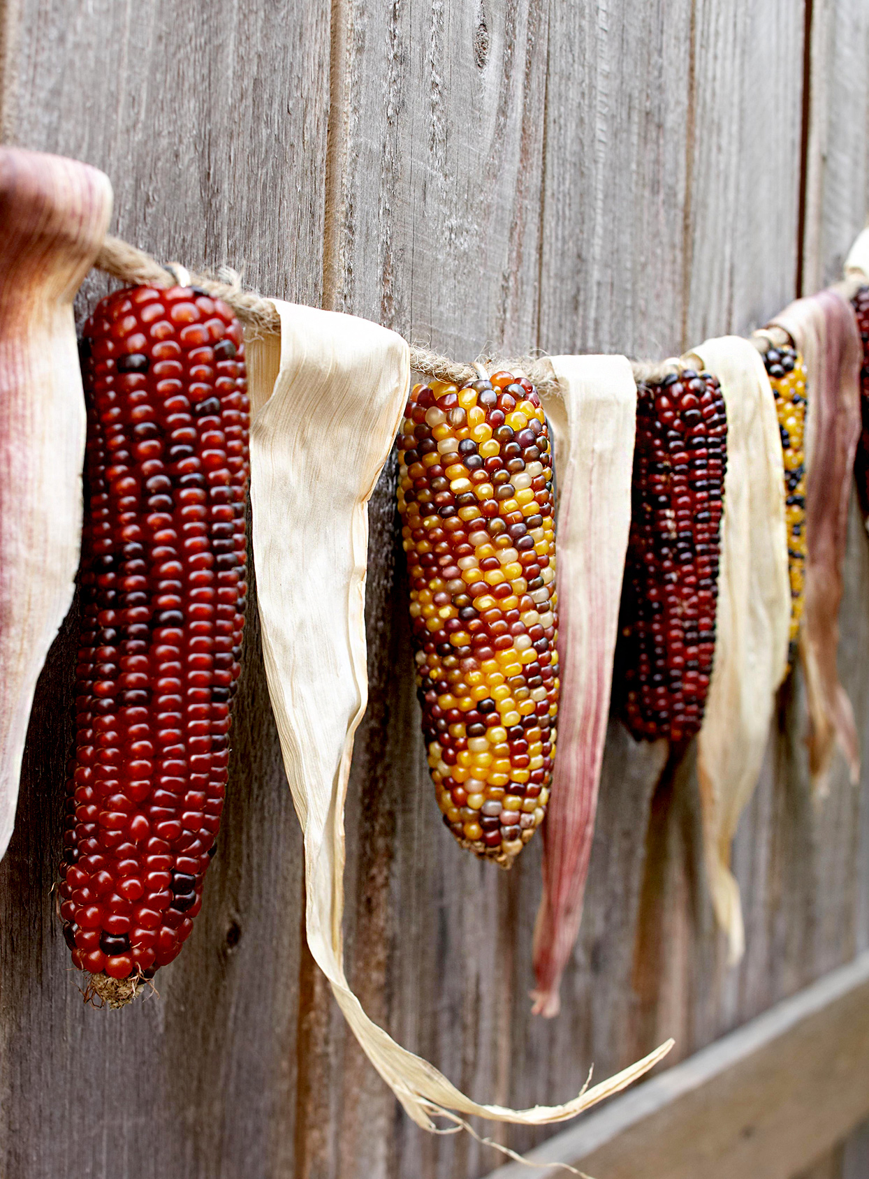 Corn and husks hanging from rope