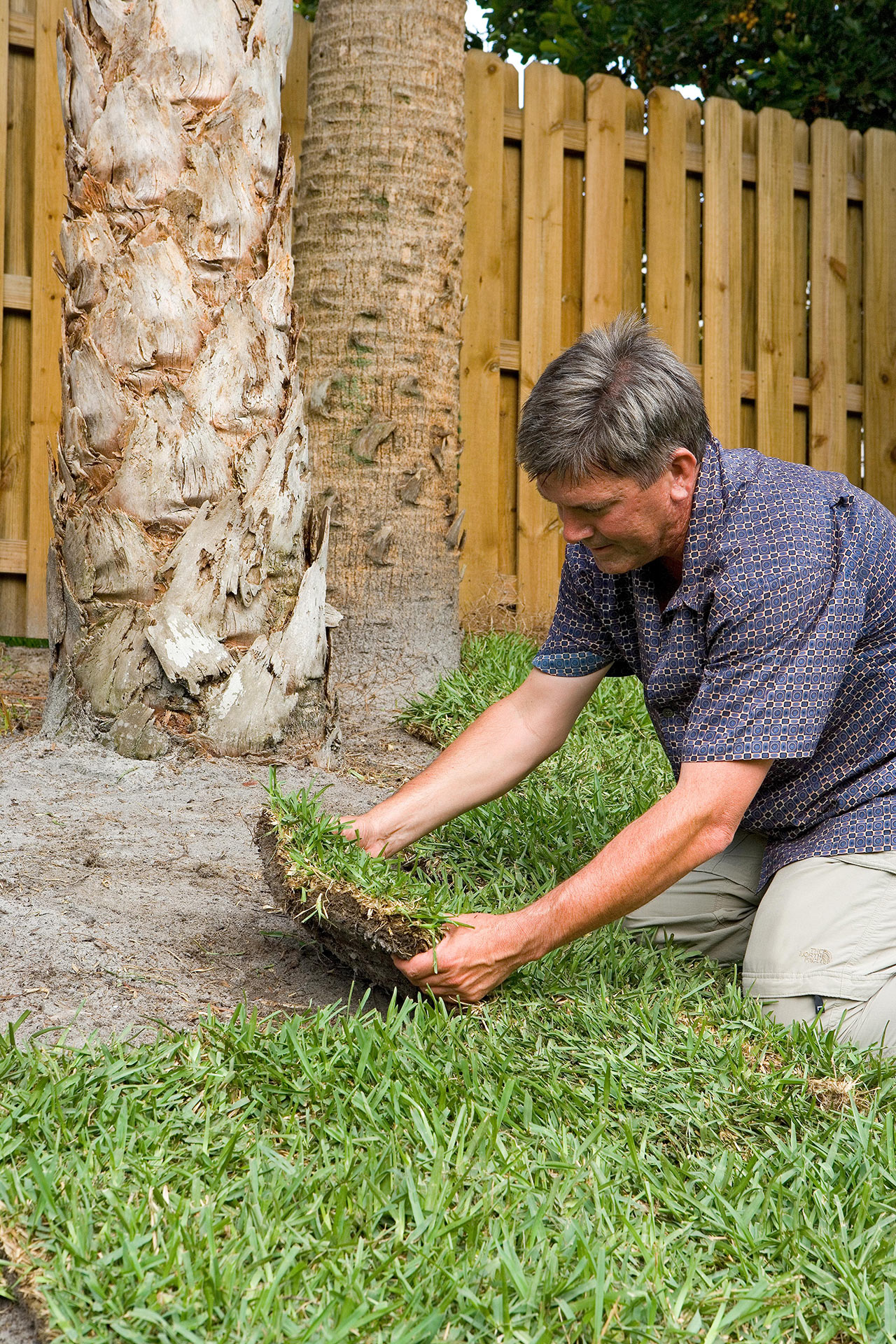 man placing sod patches near trees