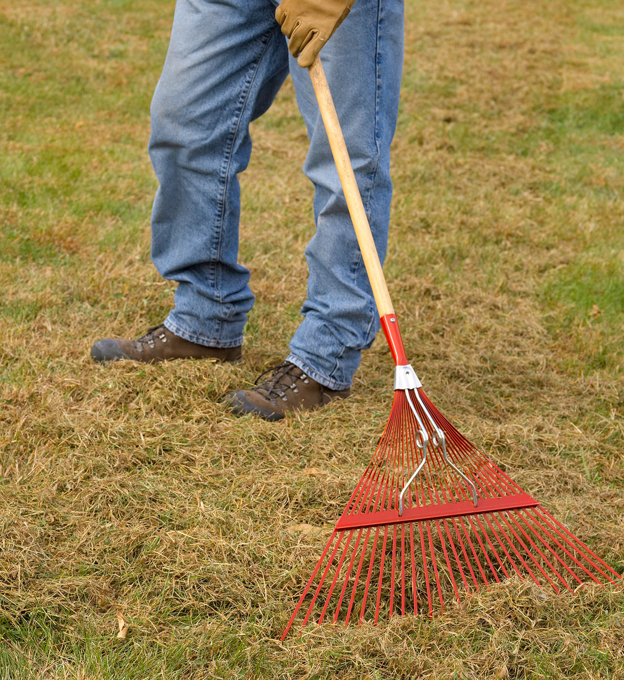 dethatching grass with red rake