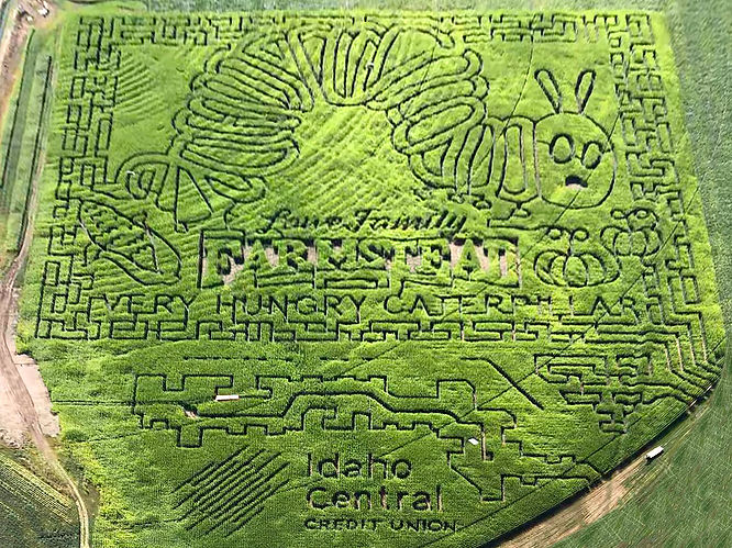 farmstead corn maze shows the very hungry caterpillar