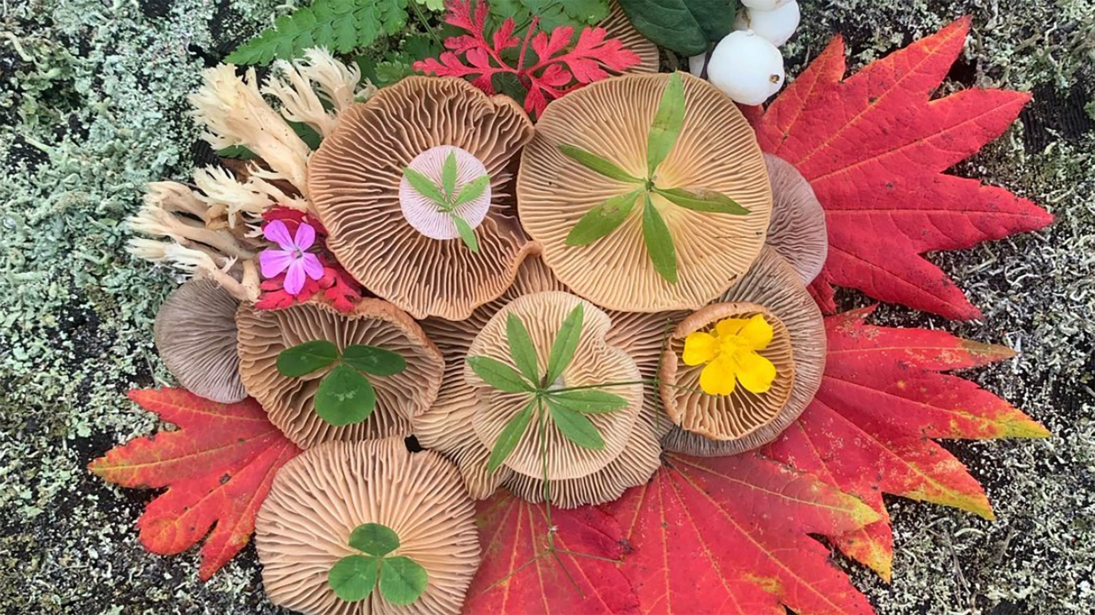 Mushrooms and leaves arranged in a pattern on forest floor