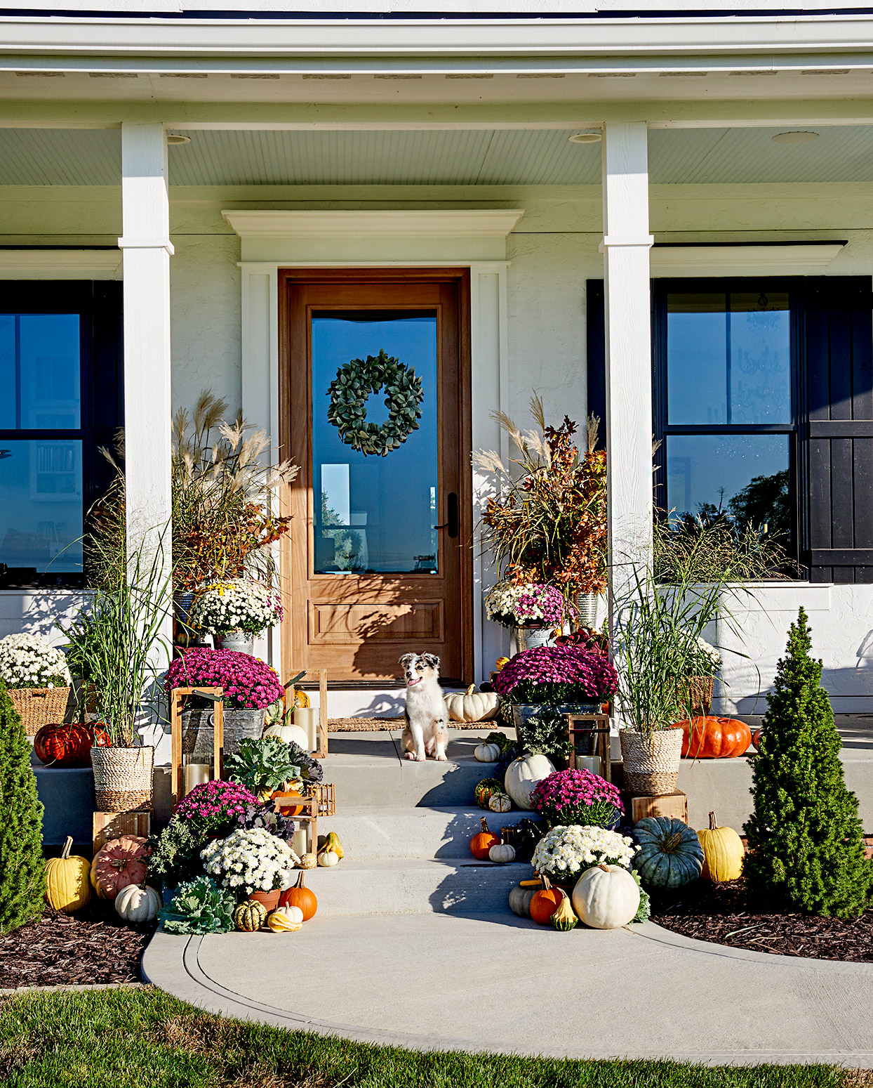 Front porch with flowers and pumpkins and dog