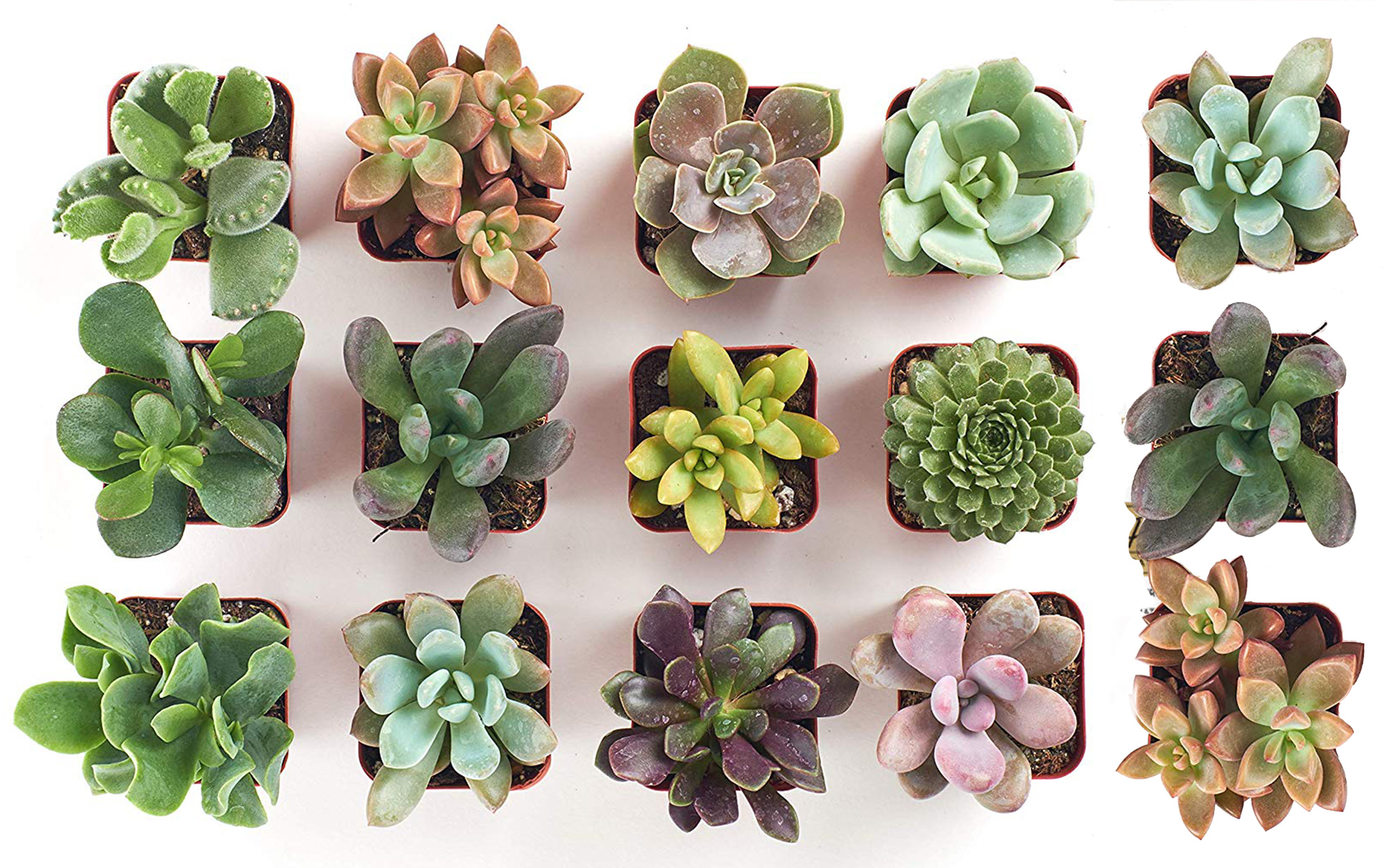 several small succulent plants on a white background shot from overhead