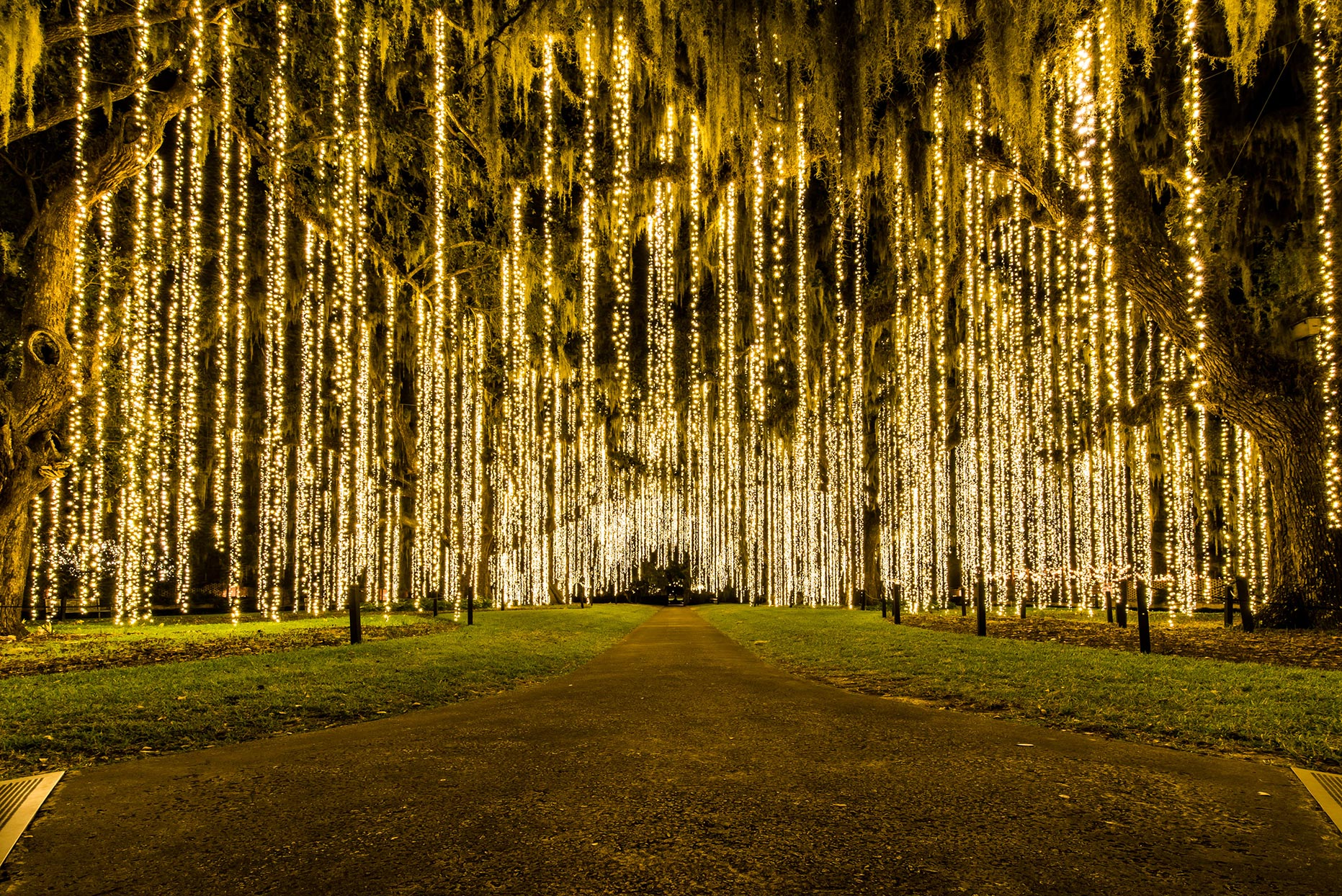 Trees with hanging Christmas lights at Brookgreen Gardens