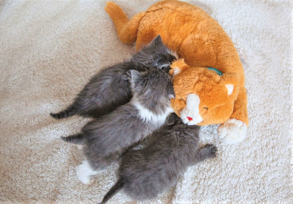 kittens with calmeroos