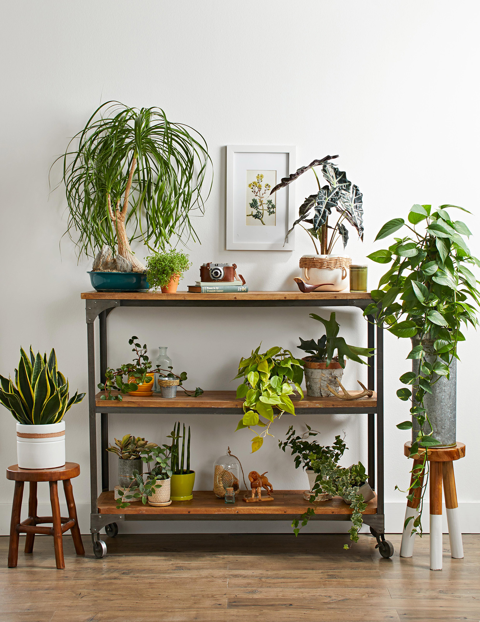 various houseplants