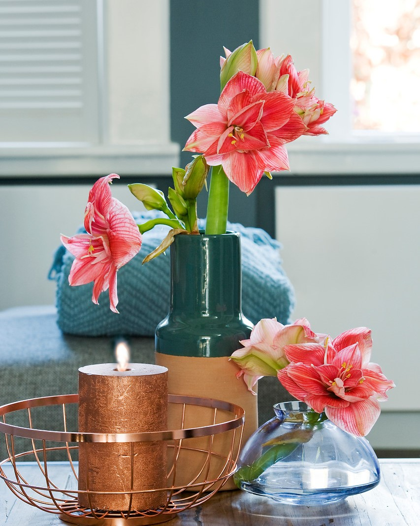 stems of amaryllis in vases near a candle