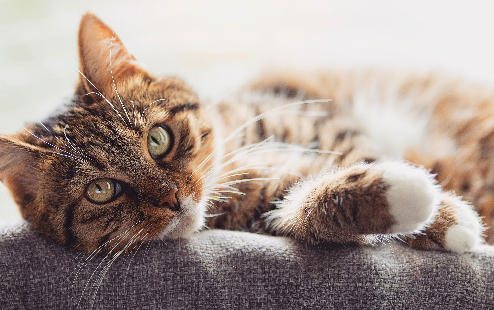cat with green eyes laying down on a sofa