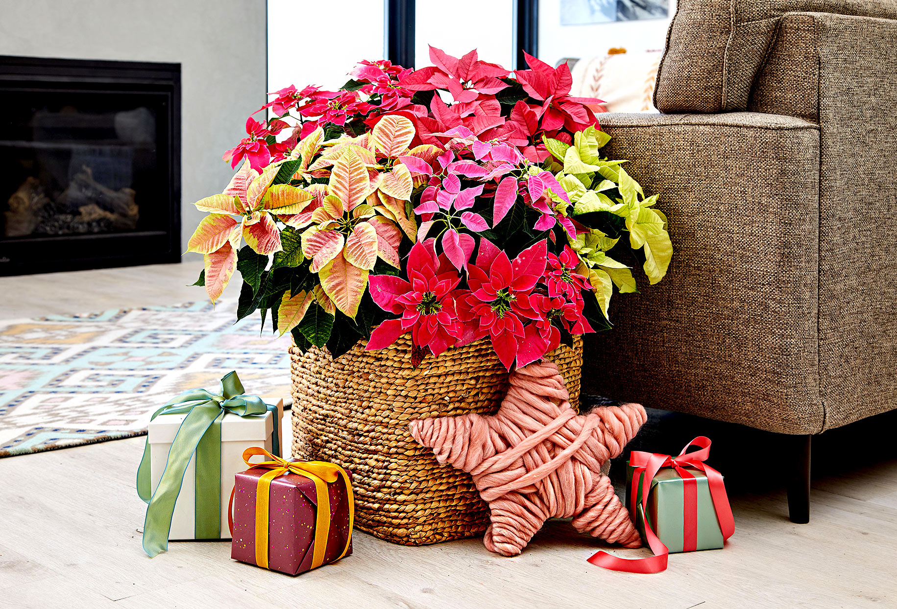 Large wicker basket with poinsettias